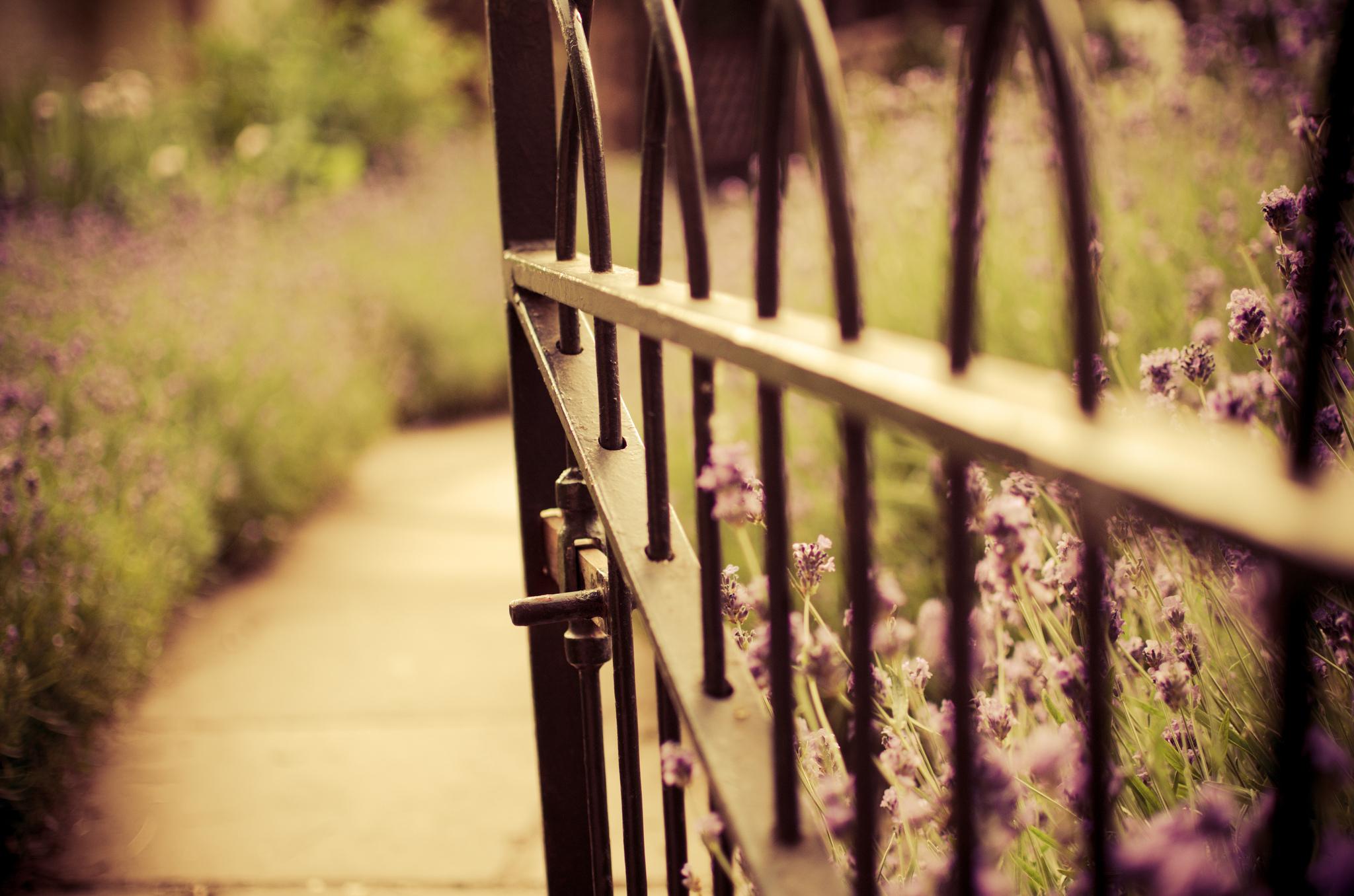 окрашенный забор  № 748064 бесплатно