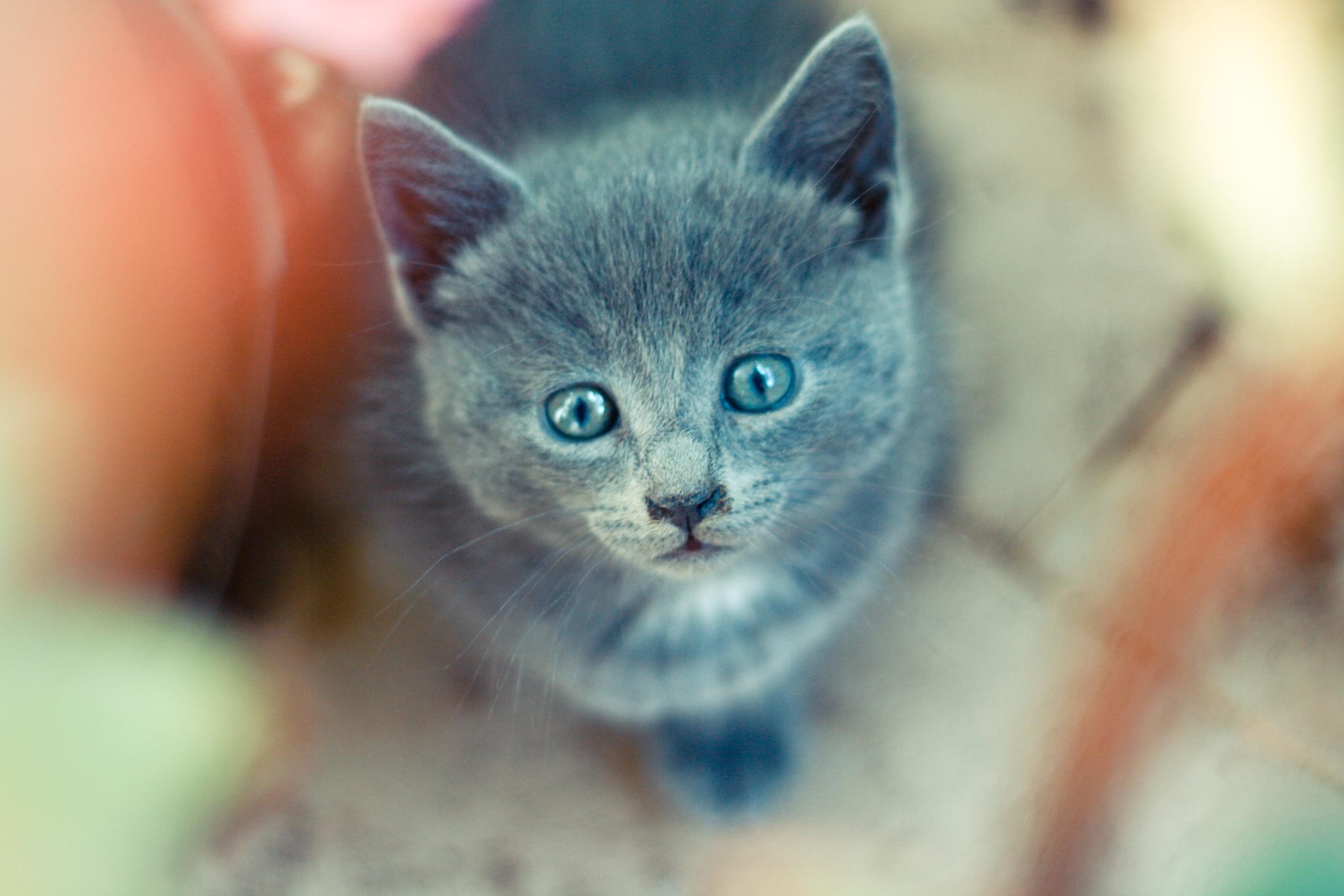 природа животные кот котенок серый журавлики nature animals cat kitten grey cranes  № 654676 бесплатно