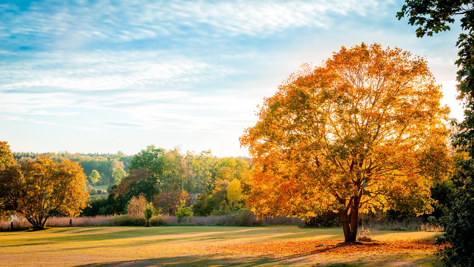 природа деревья листья осень nature trees leaves autumn  № 1036960 бесплатно