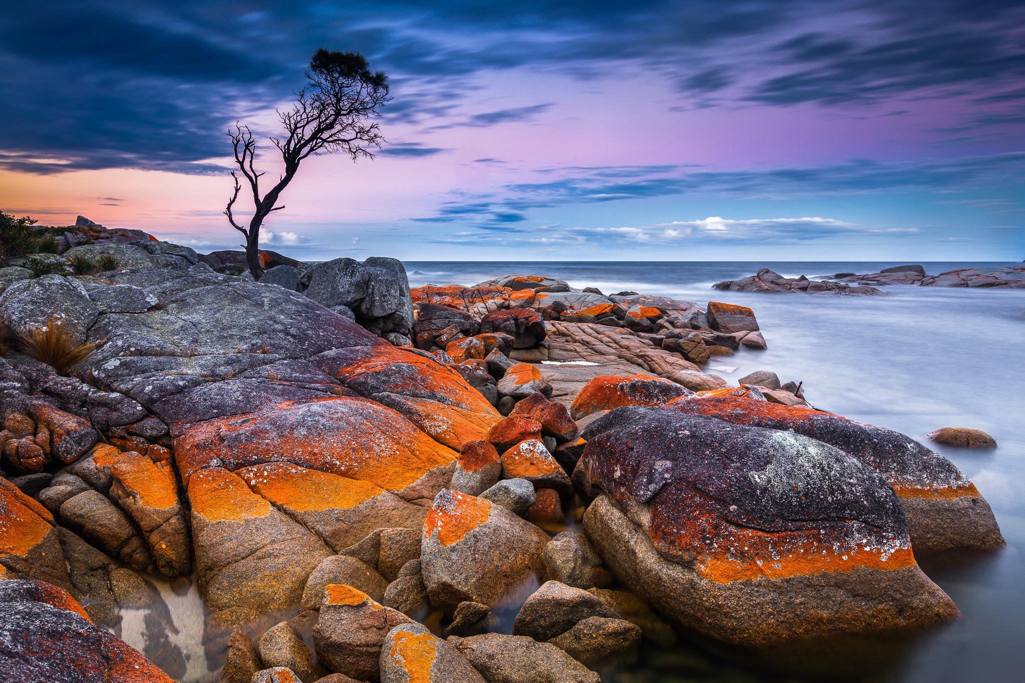 природа море деревья камни скалы  № 38470 загрузить