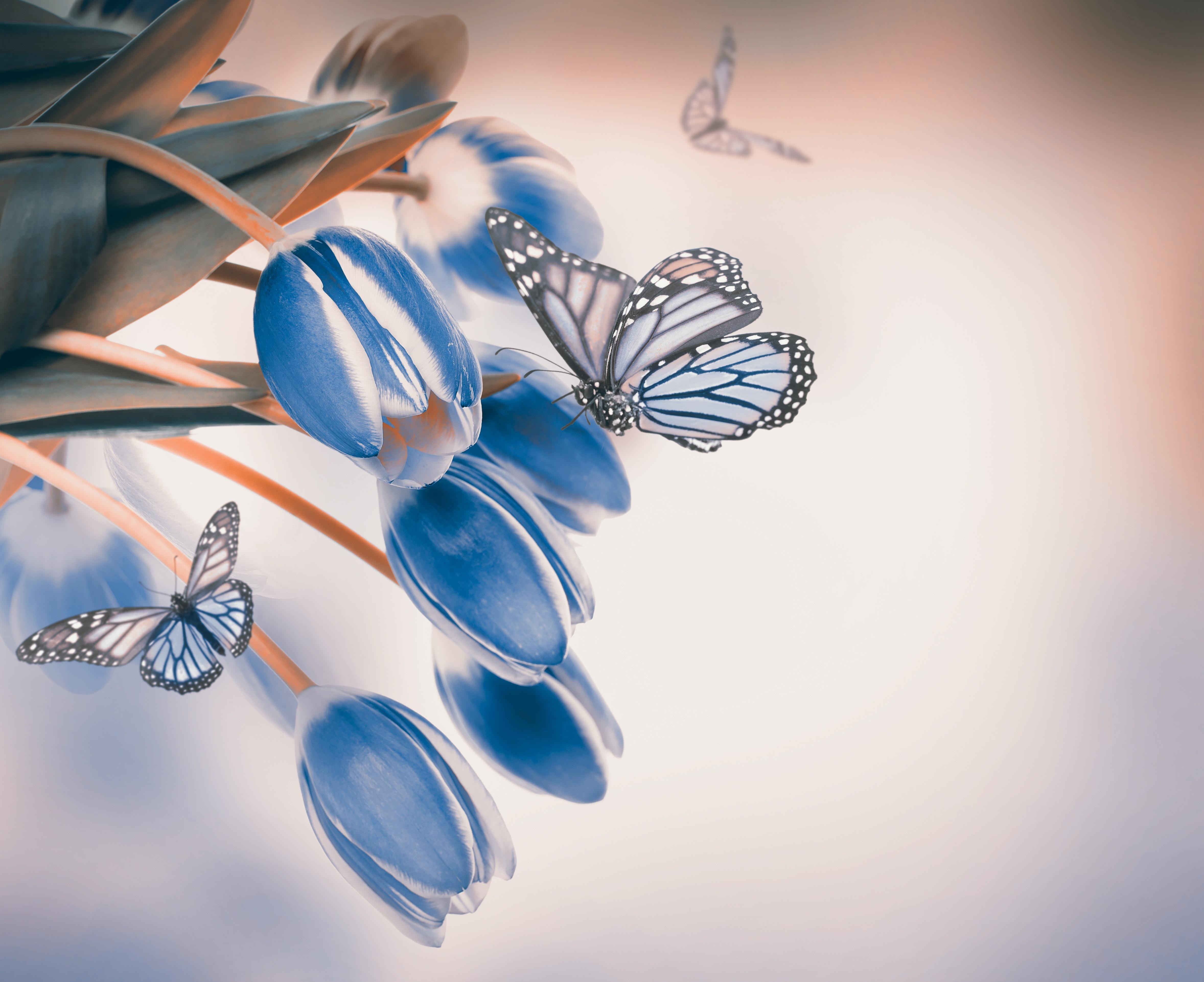 41 Types of Blue Flowers  ProFlowers Blog