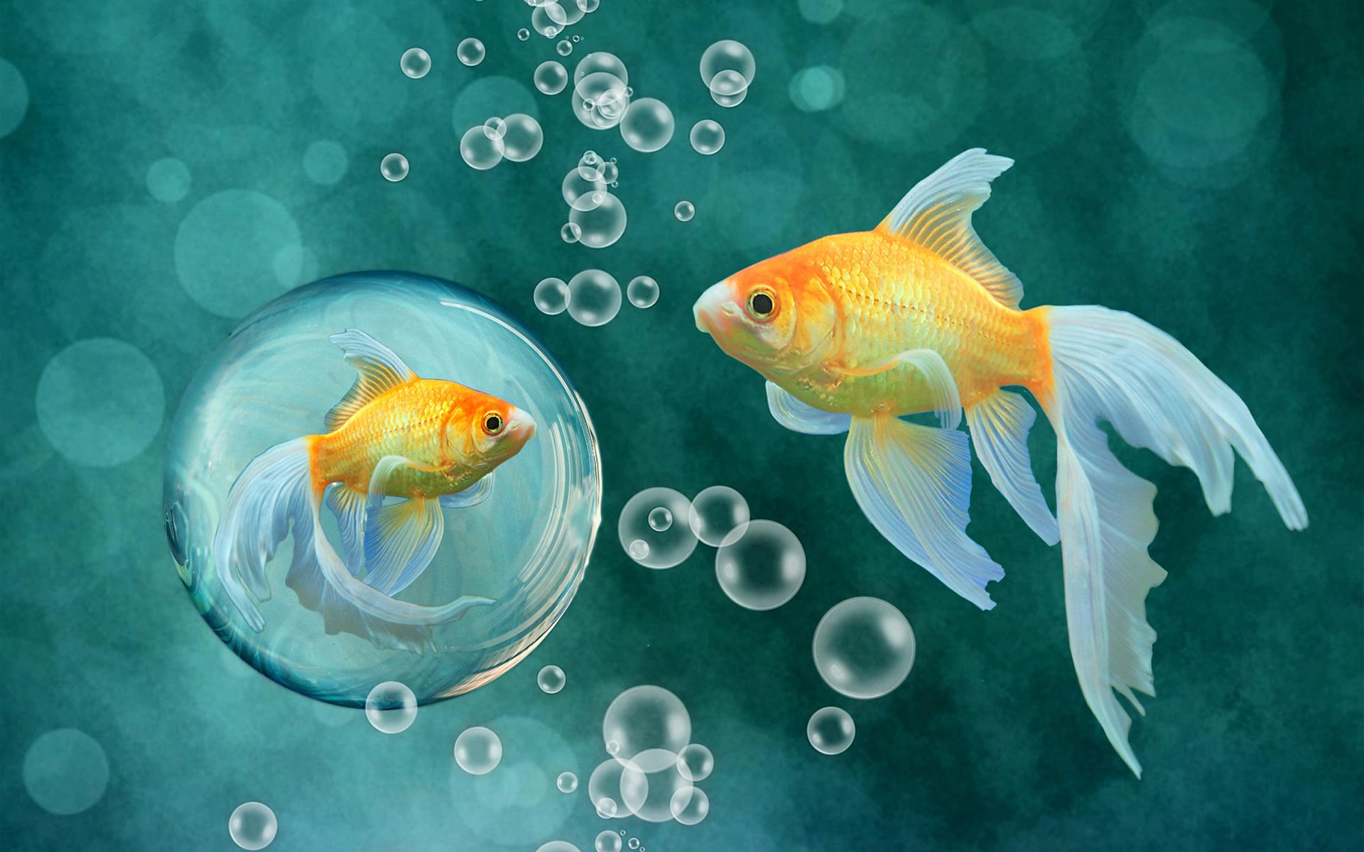 Желтая Рыба макро  № 1088158  скачать