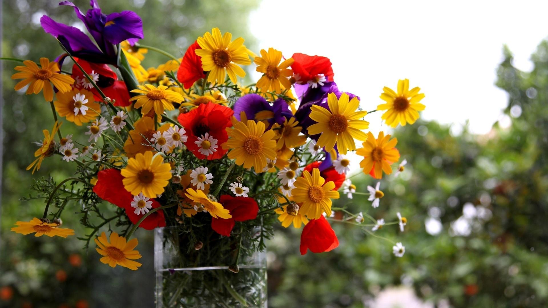 Обои на рабочий стол 1366х768 осенние цветы