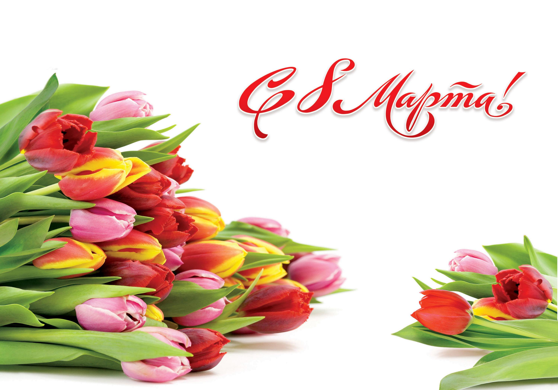 Праздники 8 марта Тюльпаны Много Цветы