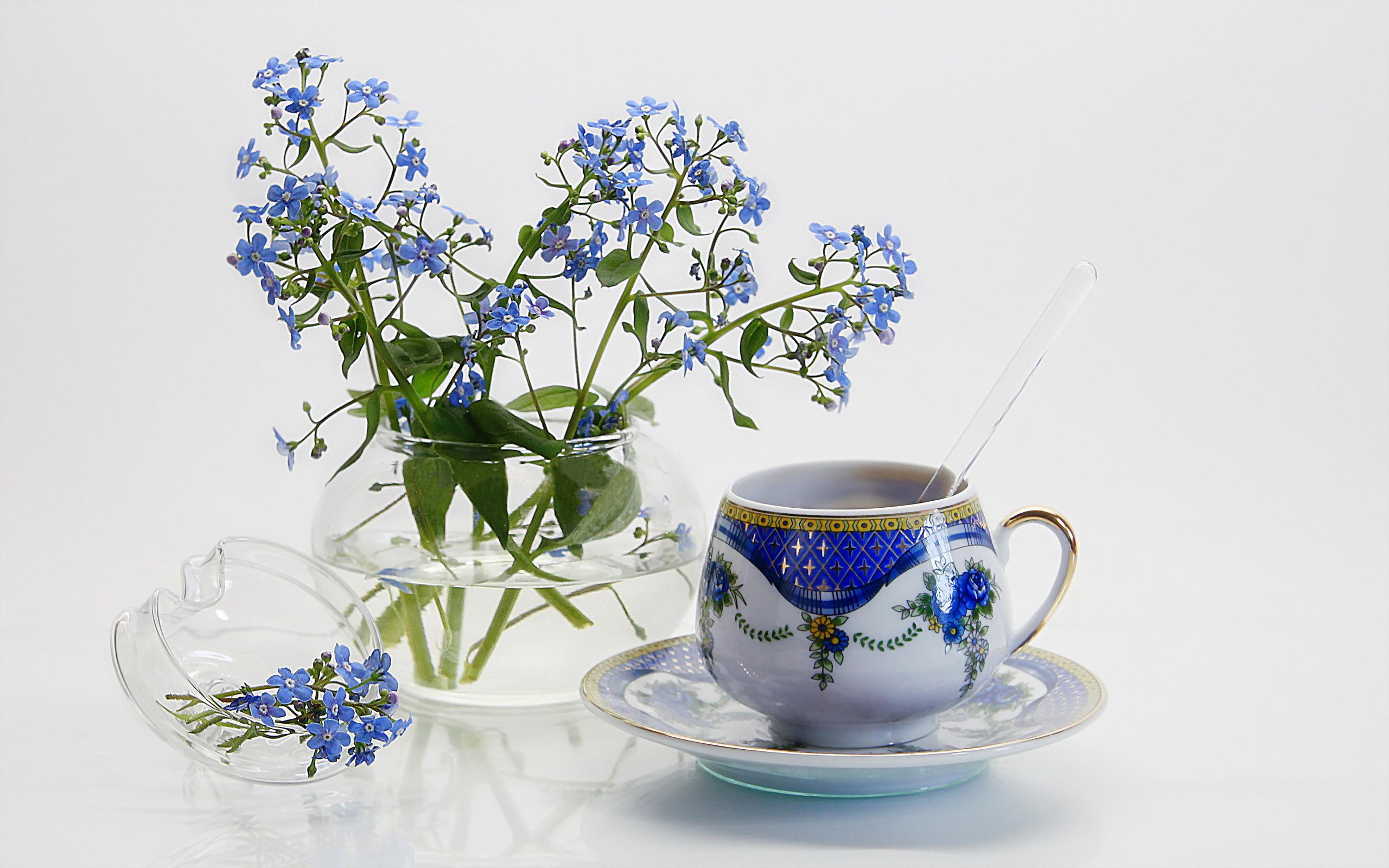 природа цветы чашка  № 1486848 загрузить