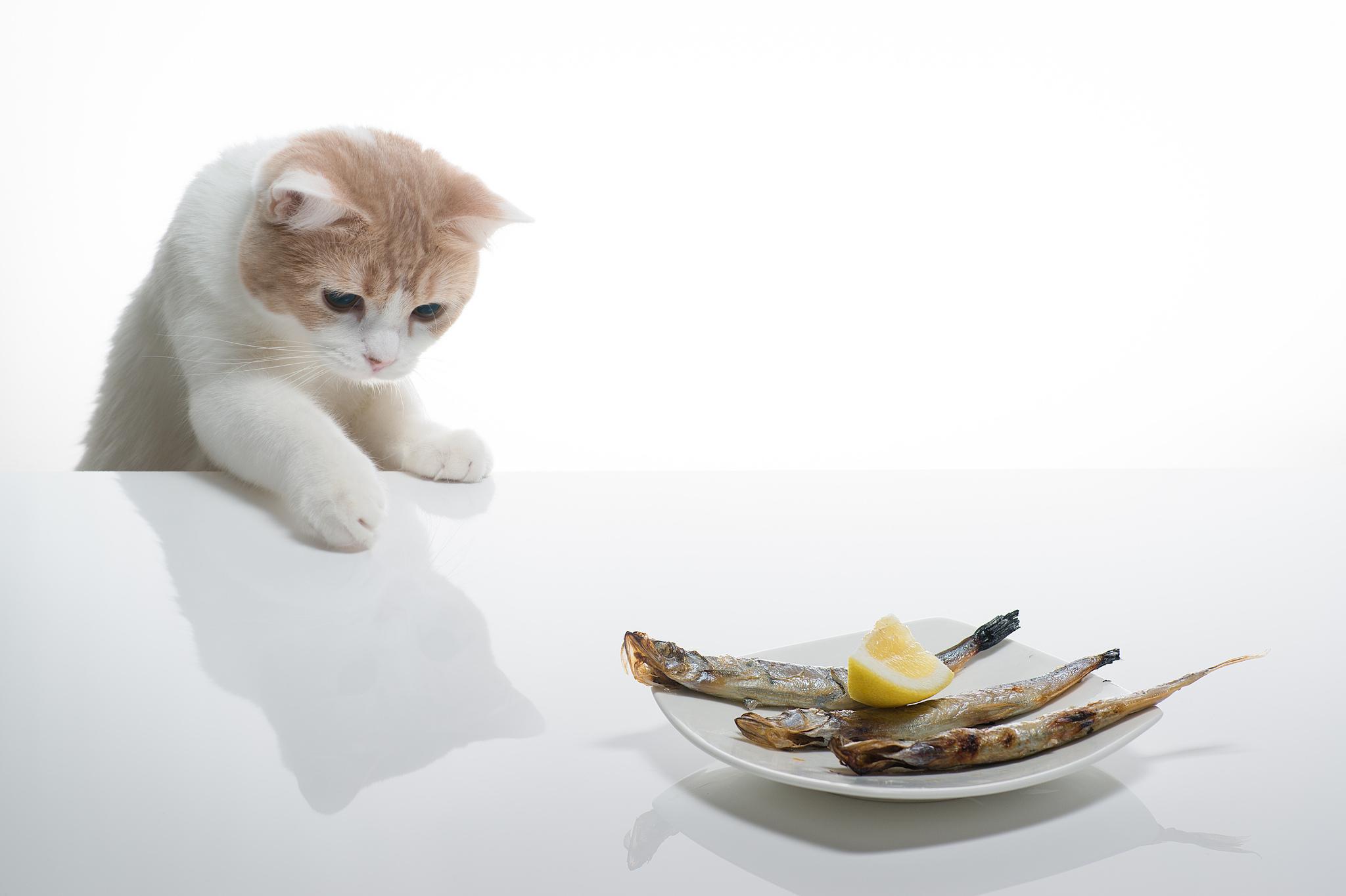 серый кот с рыбкой  № 692249 загрузить