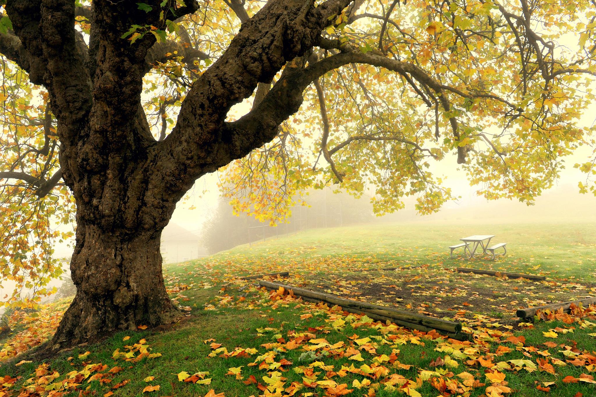 дерево листья парк  № 438506  скачать