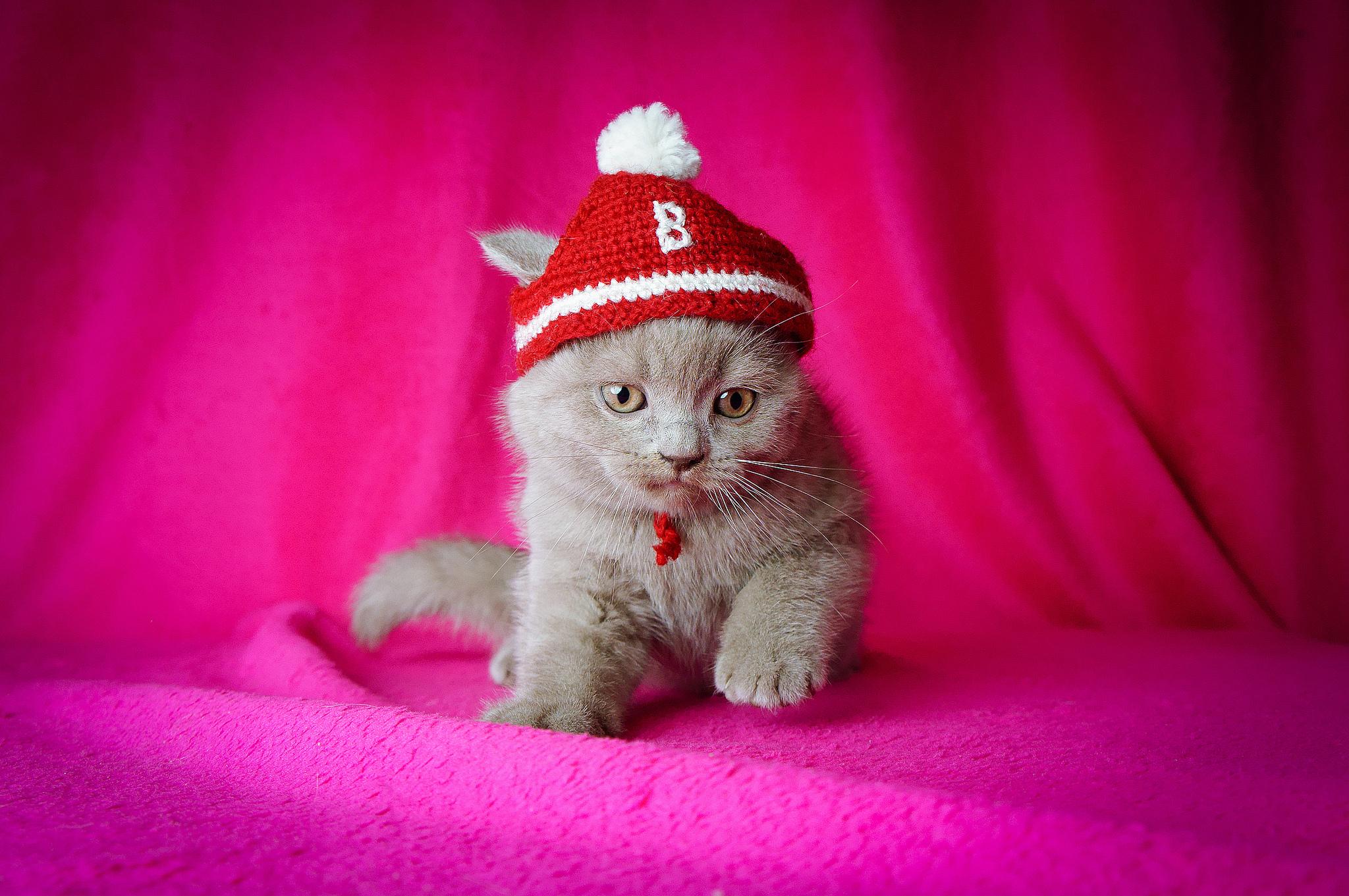 Кот под шапкой  № 3059223 загрузить