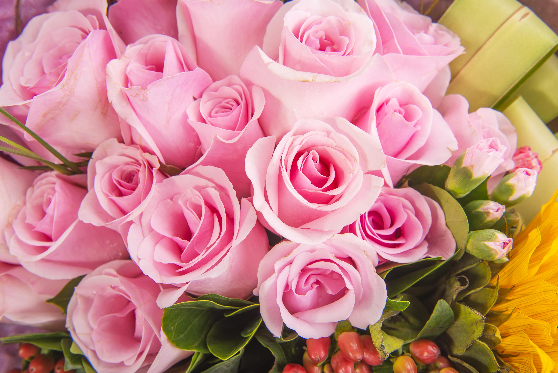 Цветы фото розы розовые