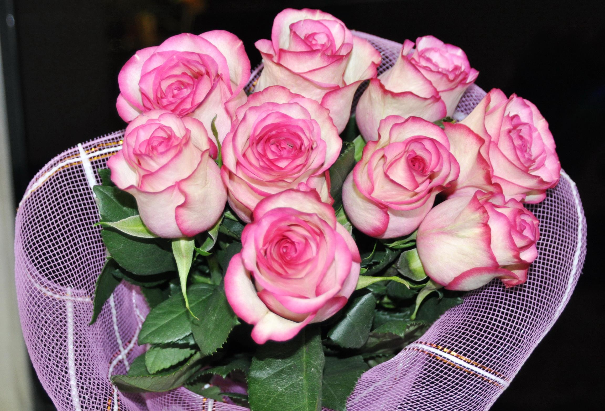 Фото розовых роз цветов
