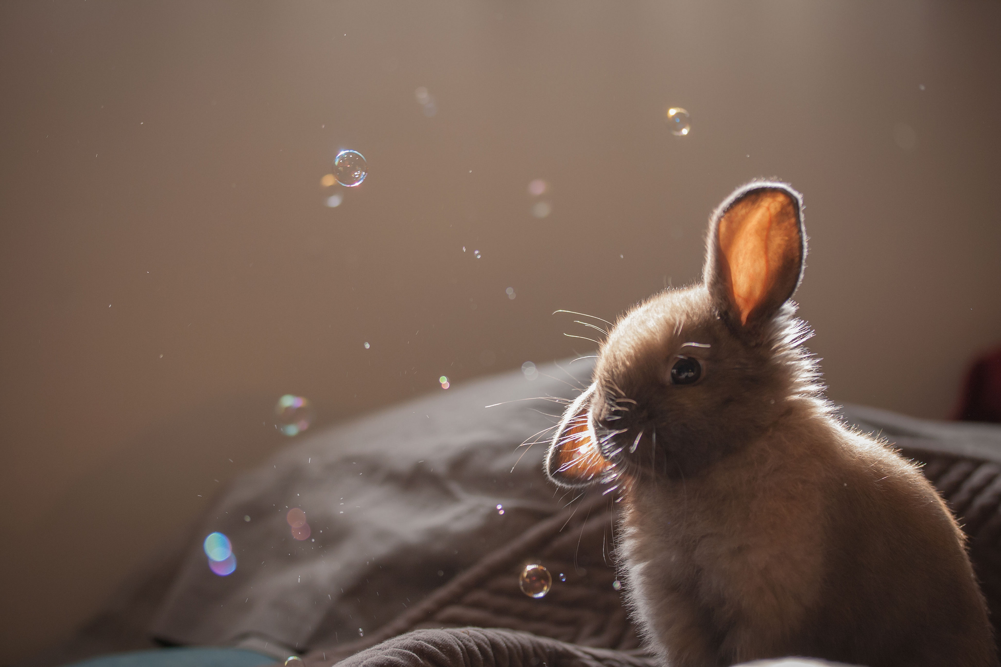 Кролик макро  № 3207681 бесплатно