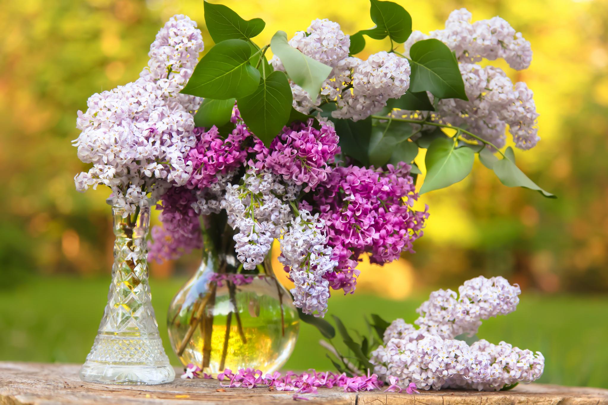 Красивые фото цветов сирени
