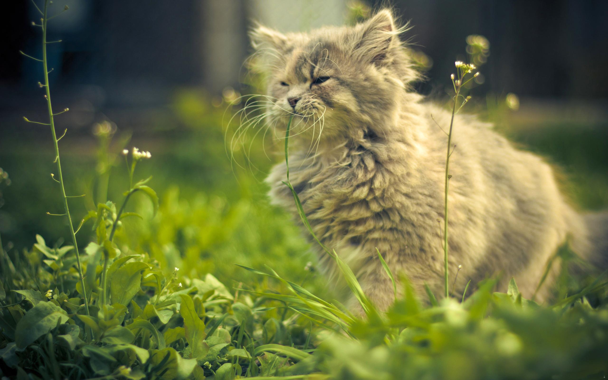 природа животные трава кот  № 1316900 бесплатно