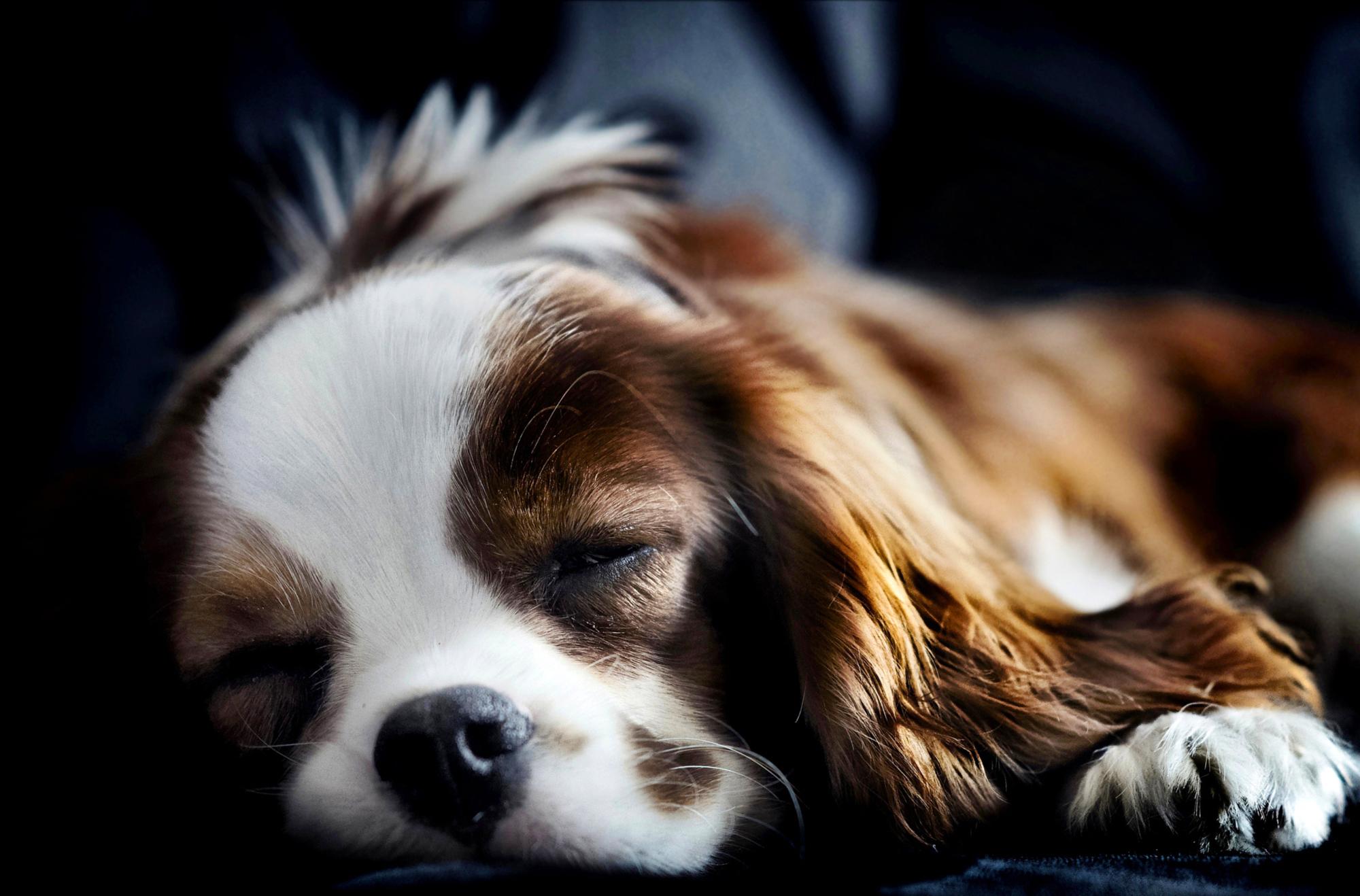 милые собаки  № 688047 без смс