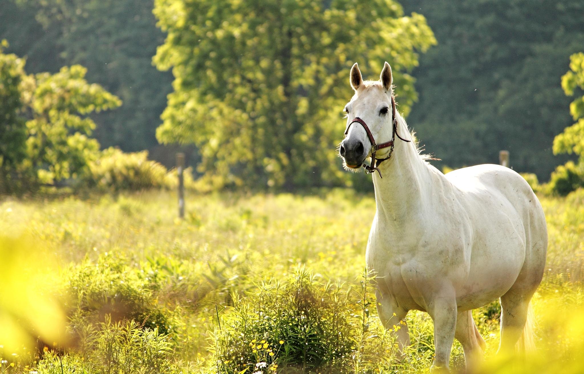 Лошади в поле  № 2021305  скачать