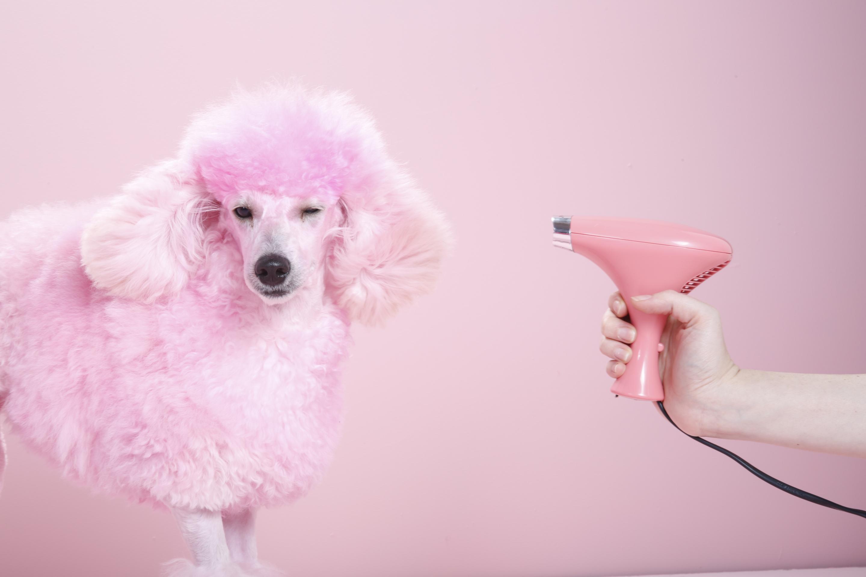 белые собаки щенки животные розовый фон  № 2918093  скачать