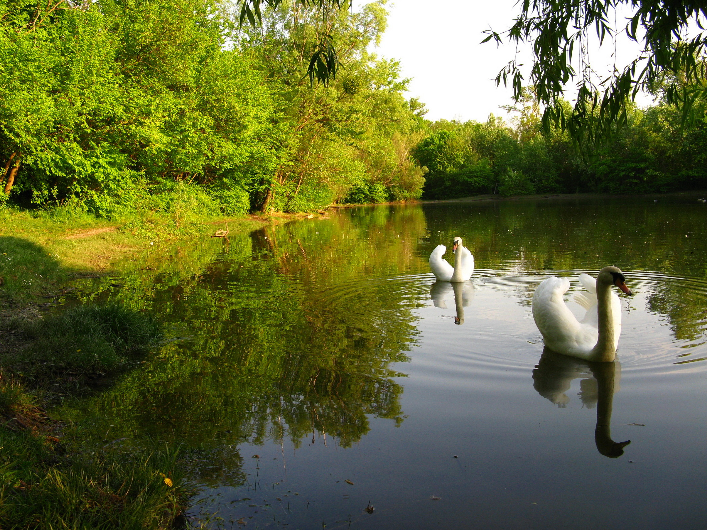Озерцо  № 3195344 бесплатно