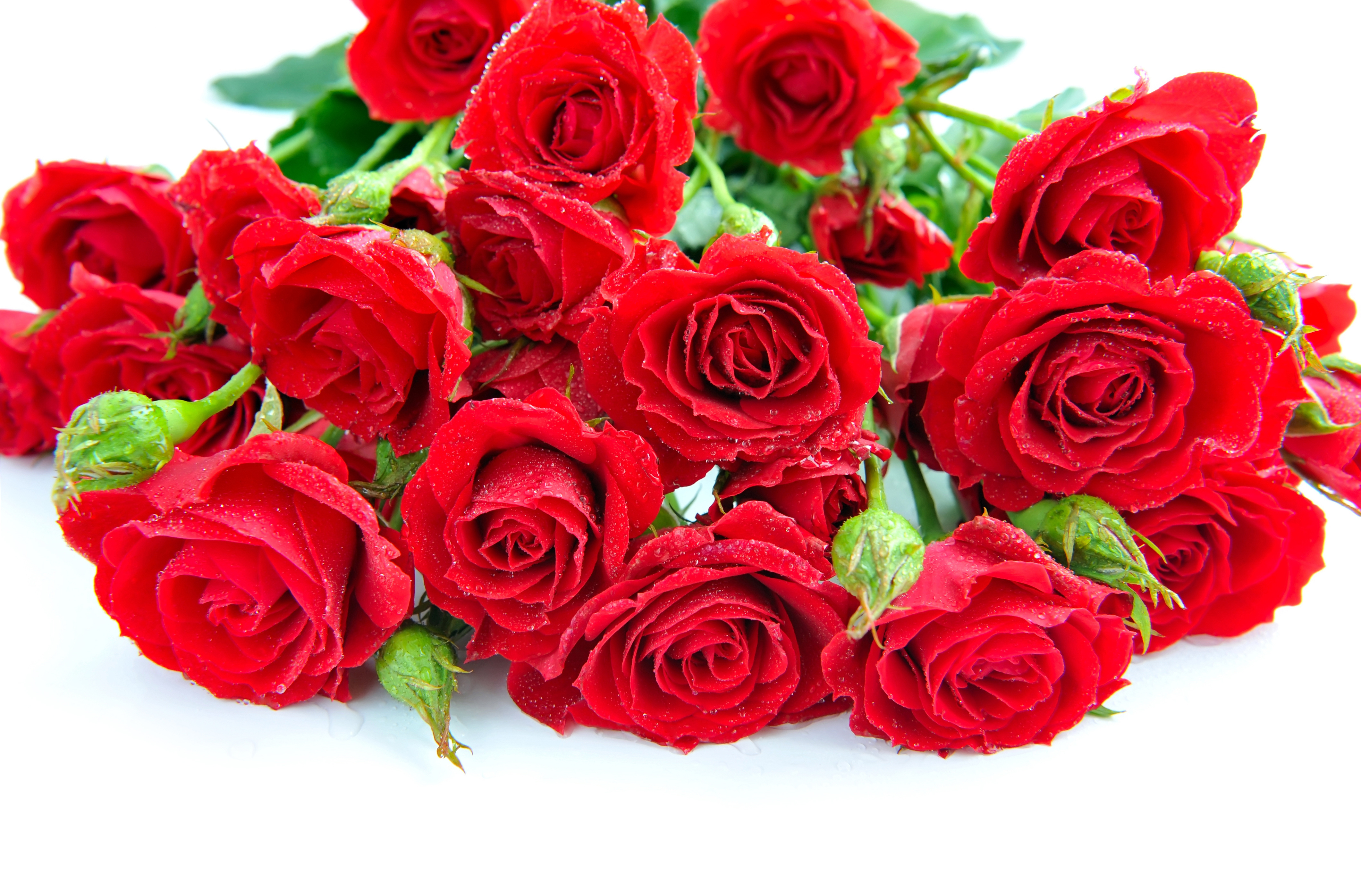 картинки с цветами розы: