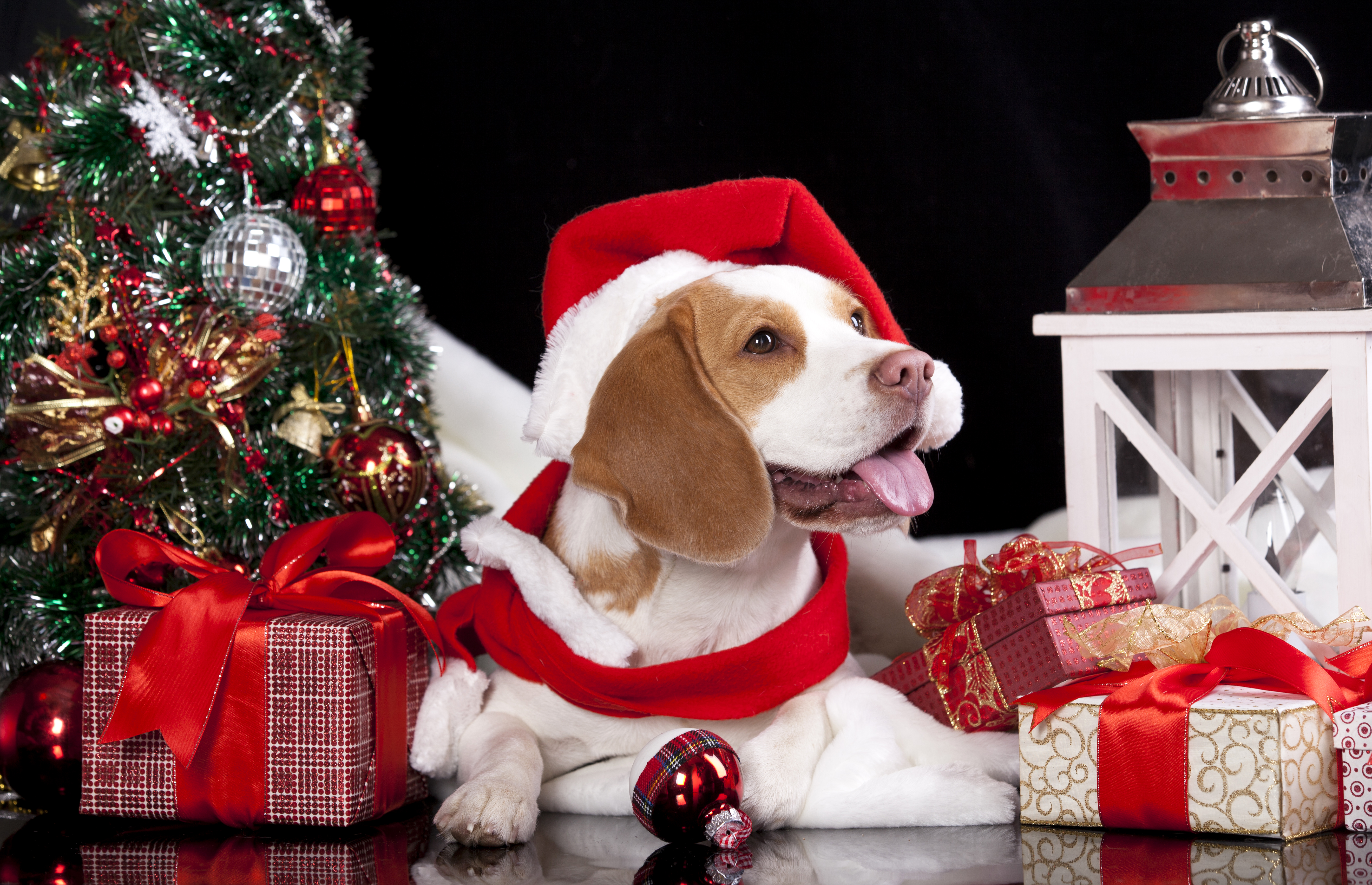 собачка в новогодней шапочке  № 1301946 загрузить