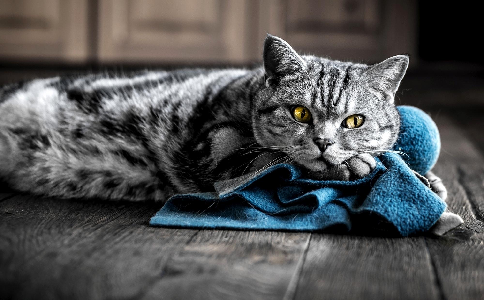 кошка зеленые глаза постель  № 3655561  скачать