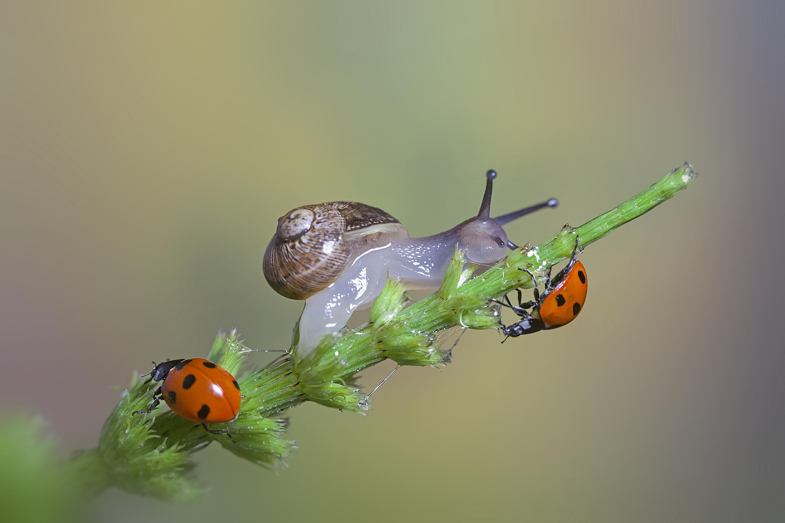 макро ветка божья коровка насекомое  № 3853327  скачать