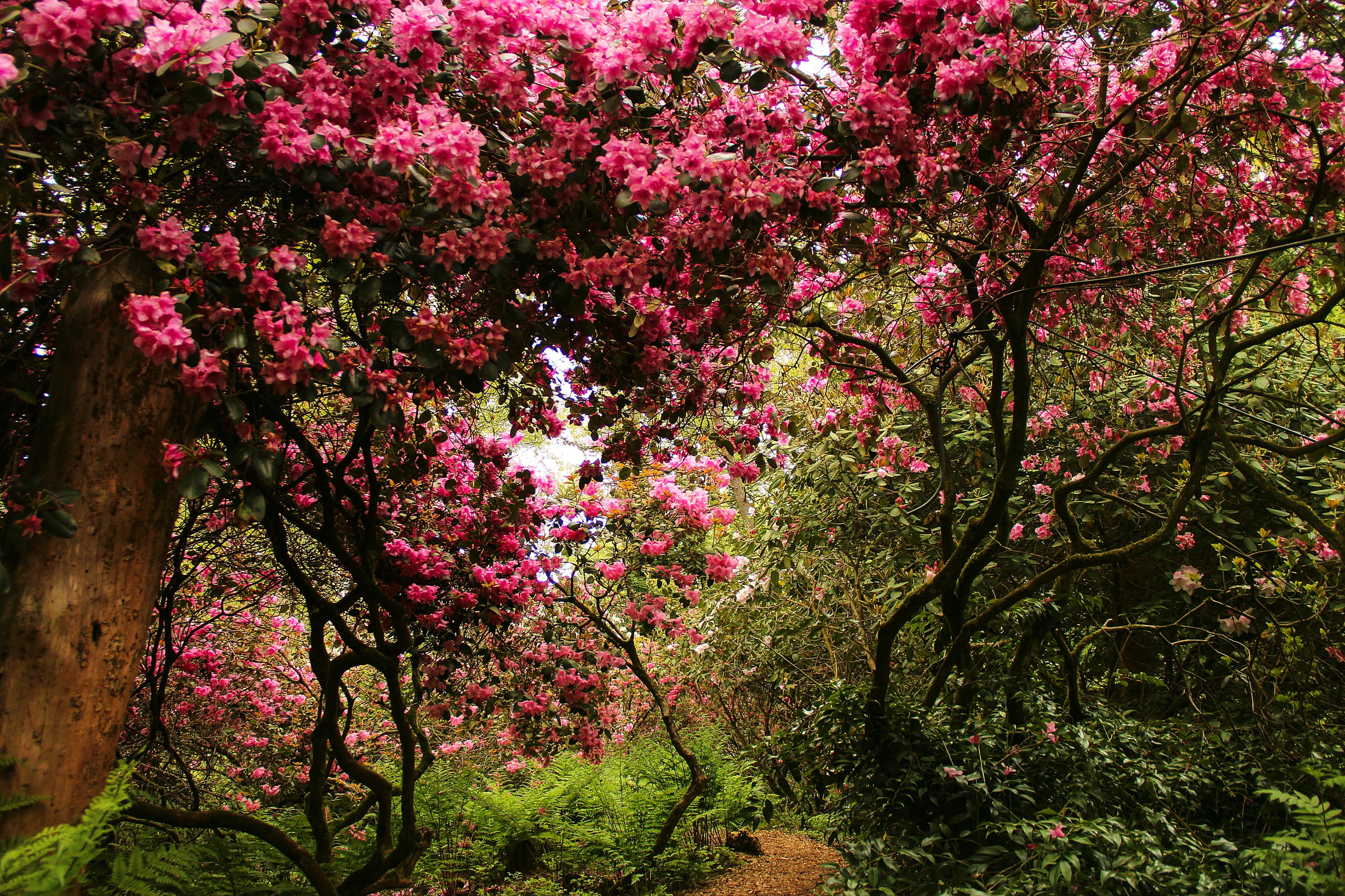 цветущие деревья во дворе  № 532050 без смс