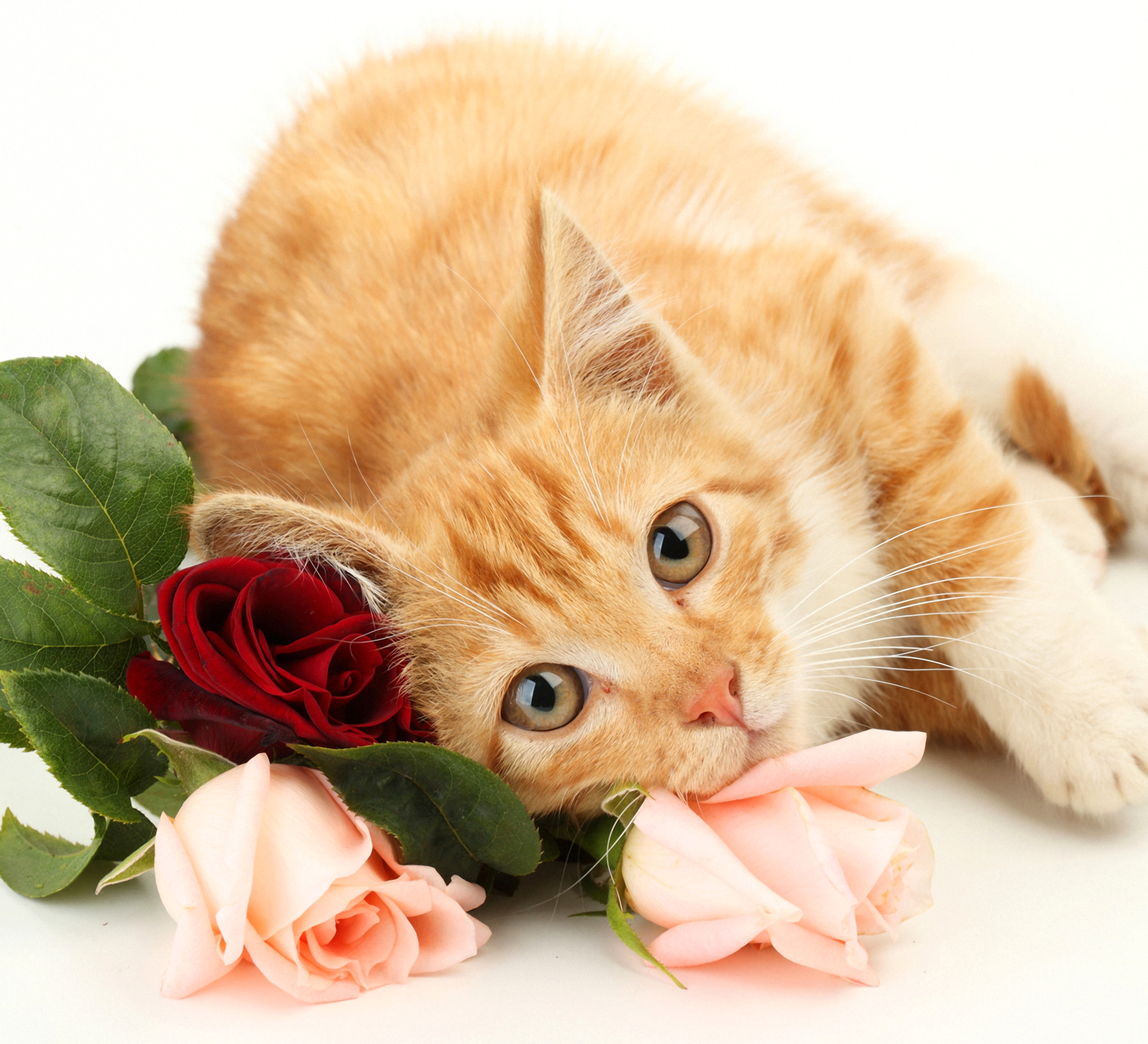 Открытка с котом и цветами 77