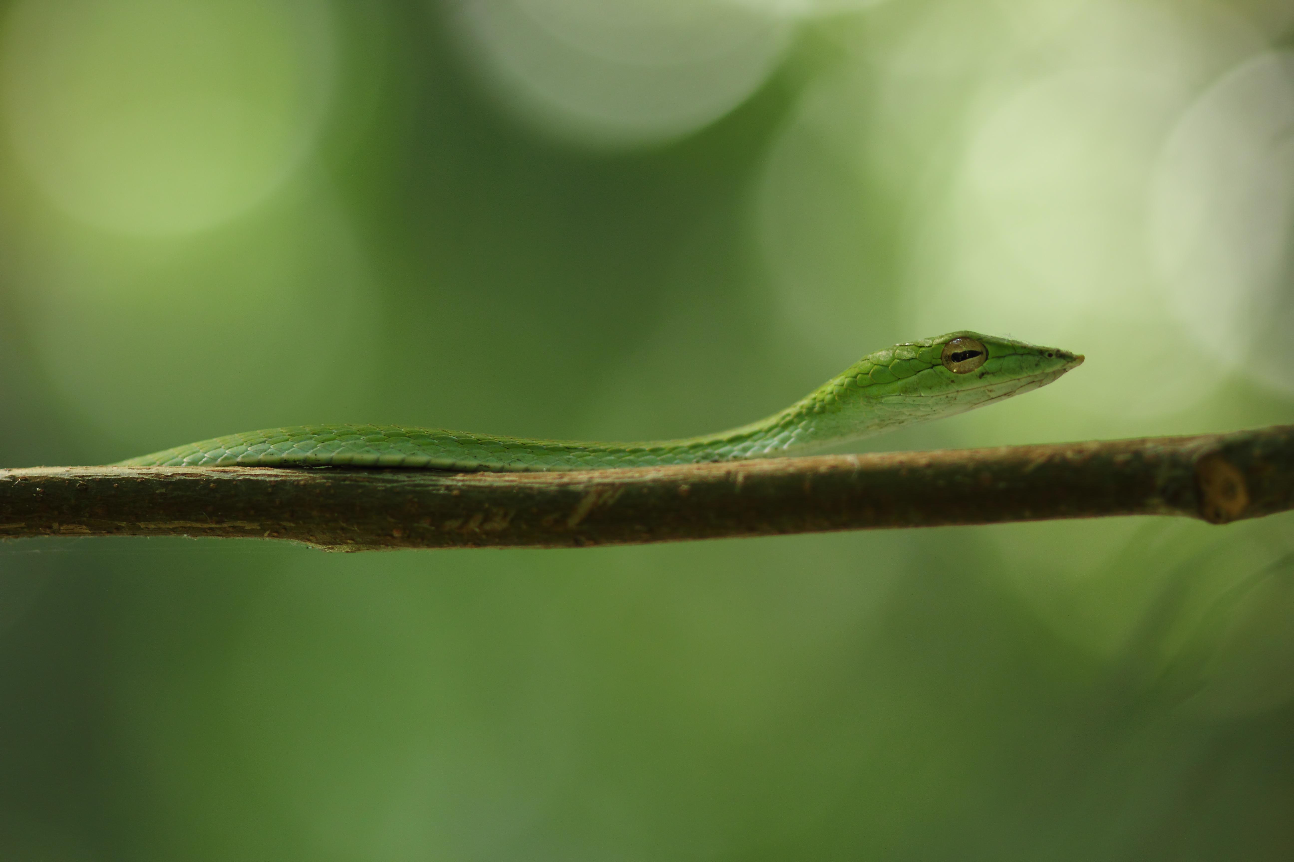 Зеленая змея макро съемка  № 3233926 загрузить