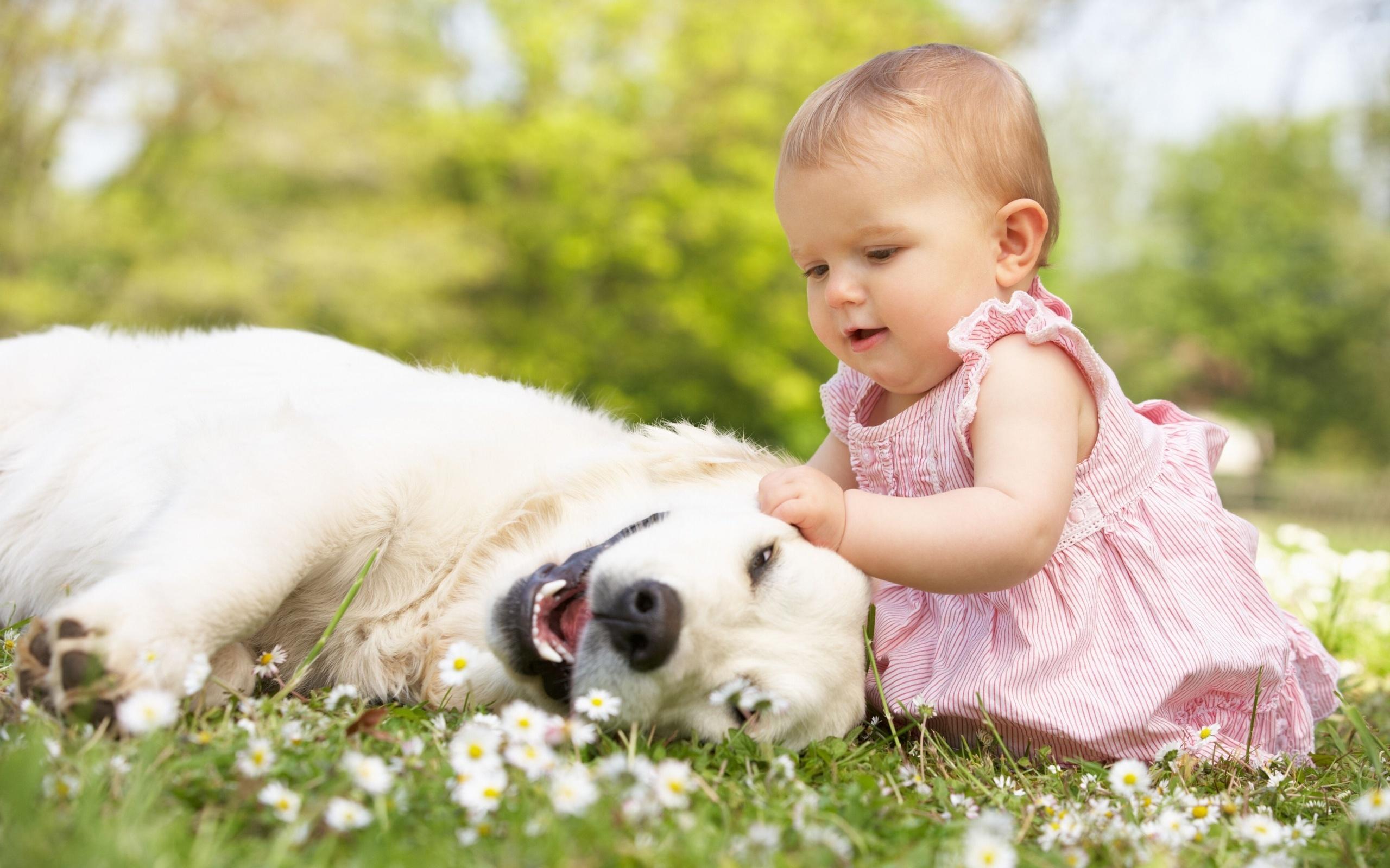 природа животные собака девочка жизнь nature animals dog girl life  № 3951006 без смс