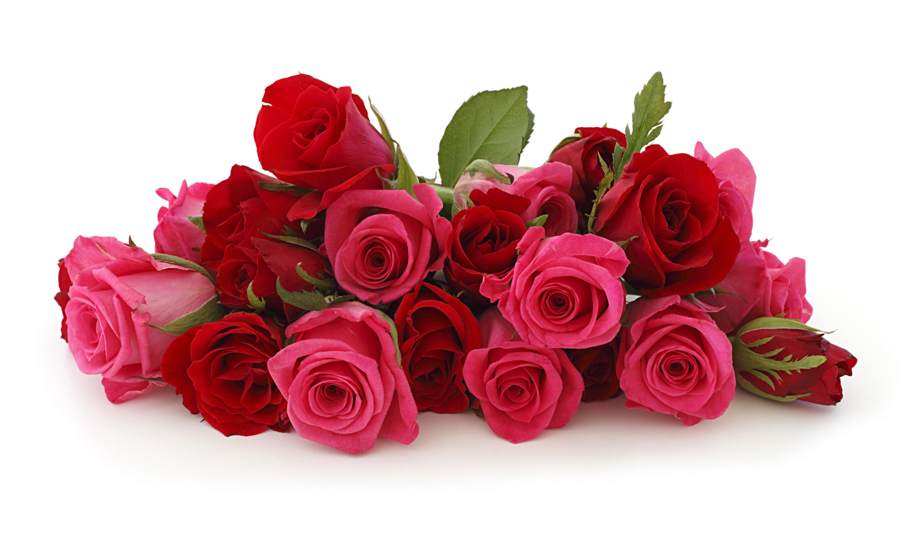 обои для рабочего стола розы:
