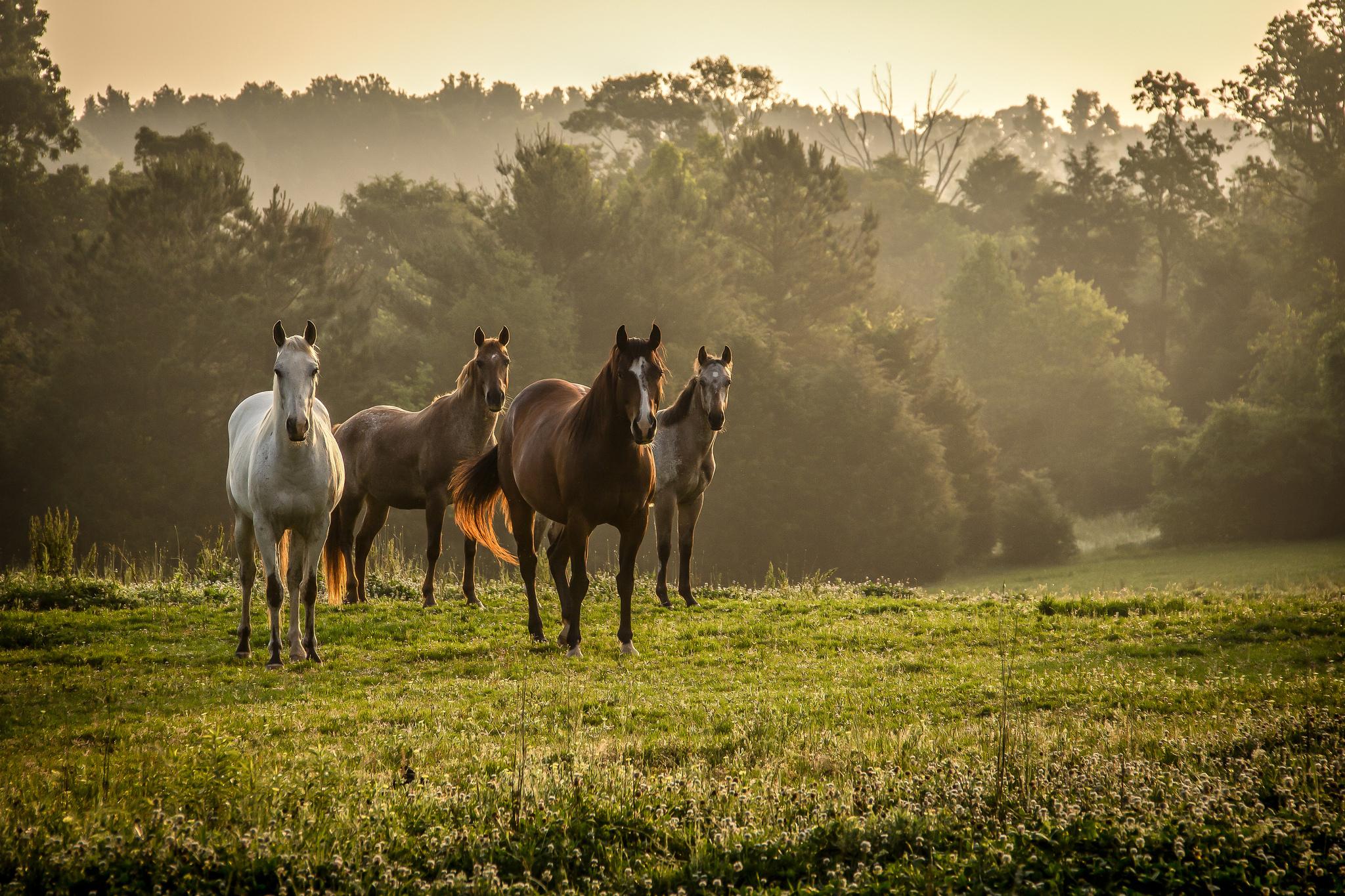Лошади в поле  № 2021209 загрузить