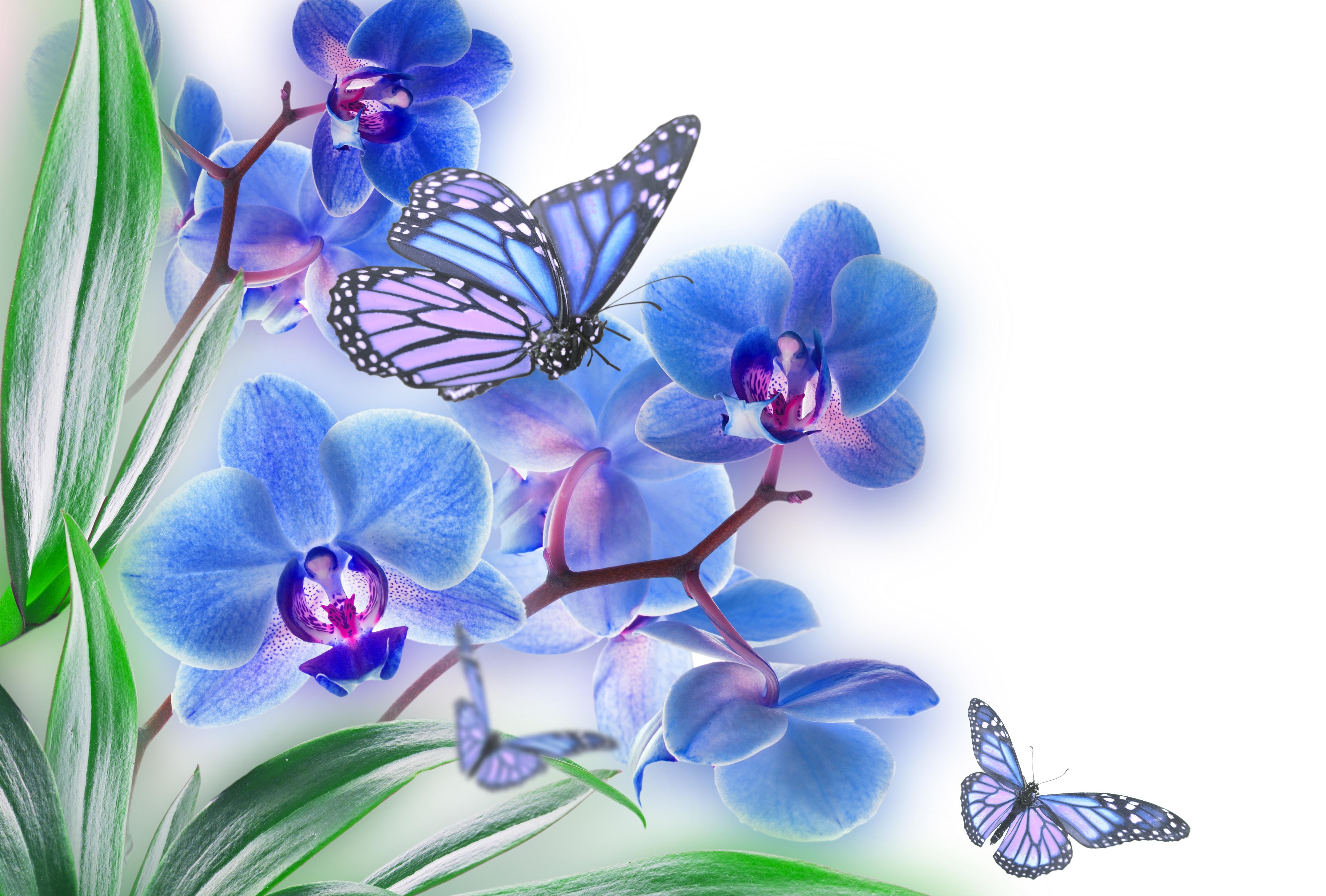 бабочки из лепестков  № 2303816  скачать