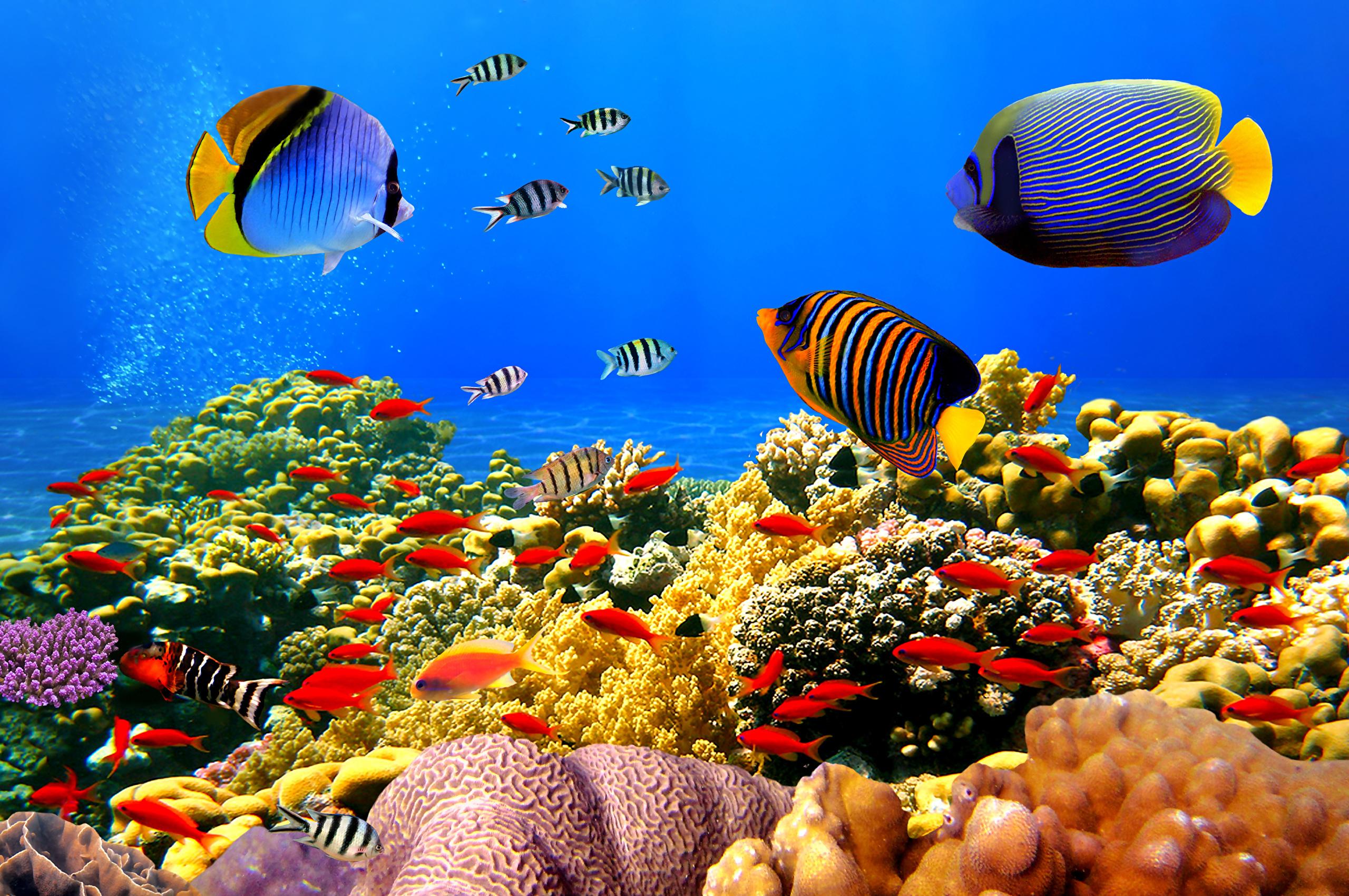 Яркие краски подводного мира  № 618913  скачать