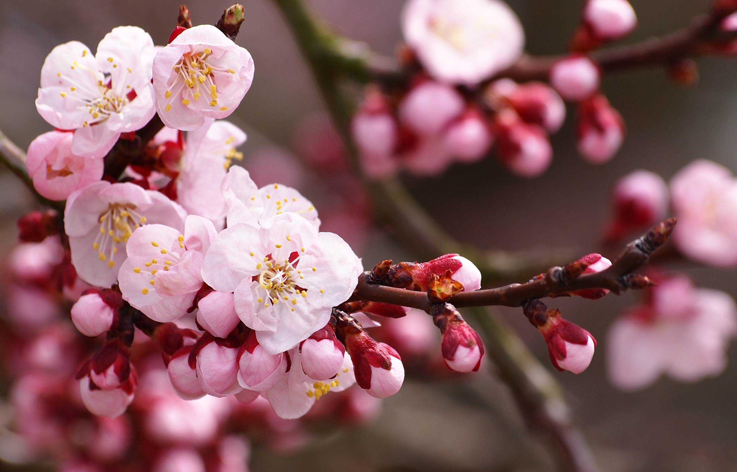 красивые широкоформатные обои на рабочий стол высокого качества цветы № 230380  скачать