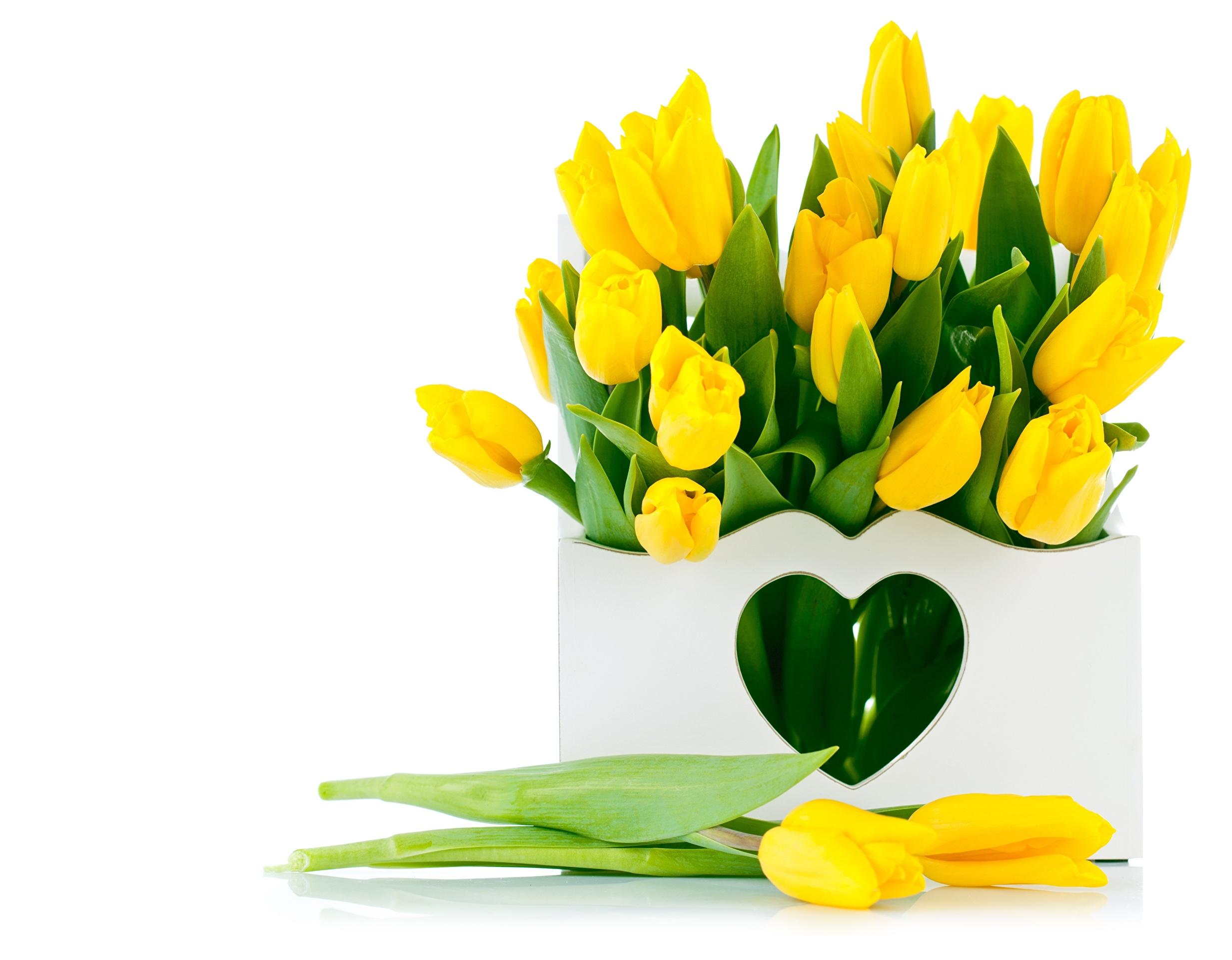 Желтые цветы тюльпаны