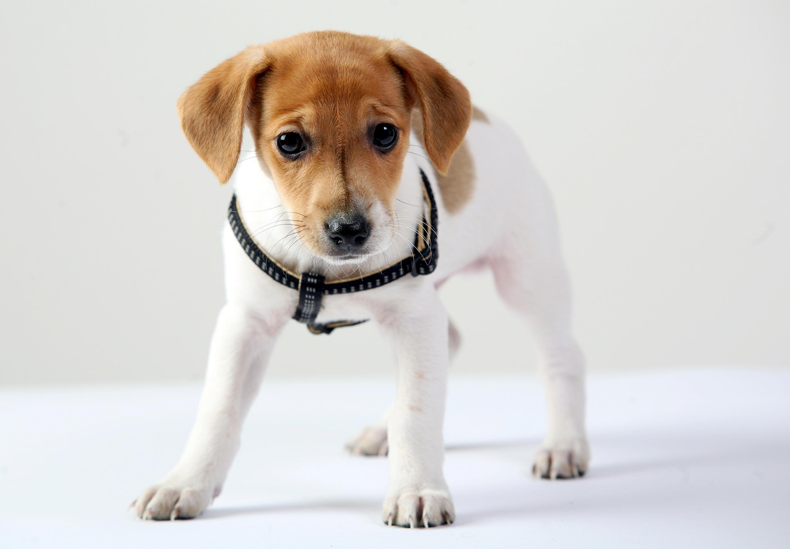 собака взгляд dog view  № 647840  скачать