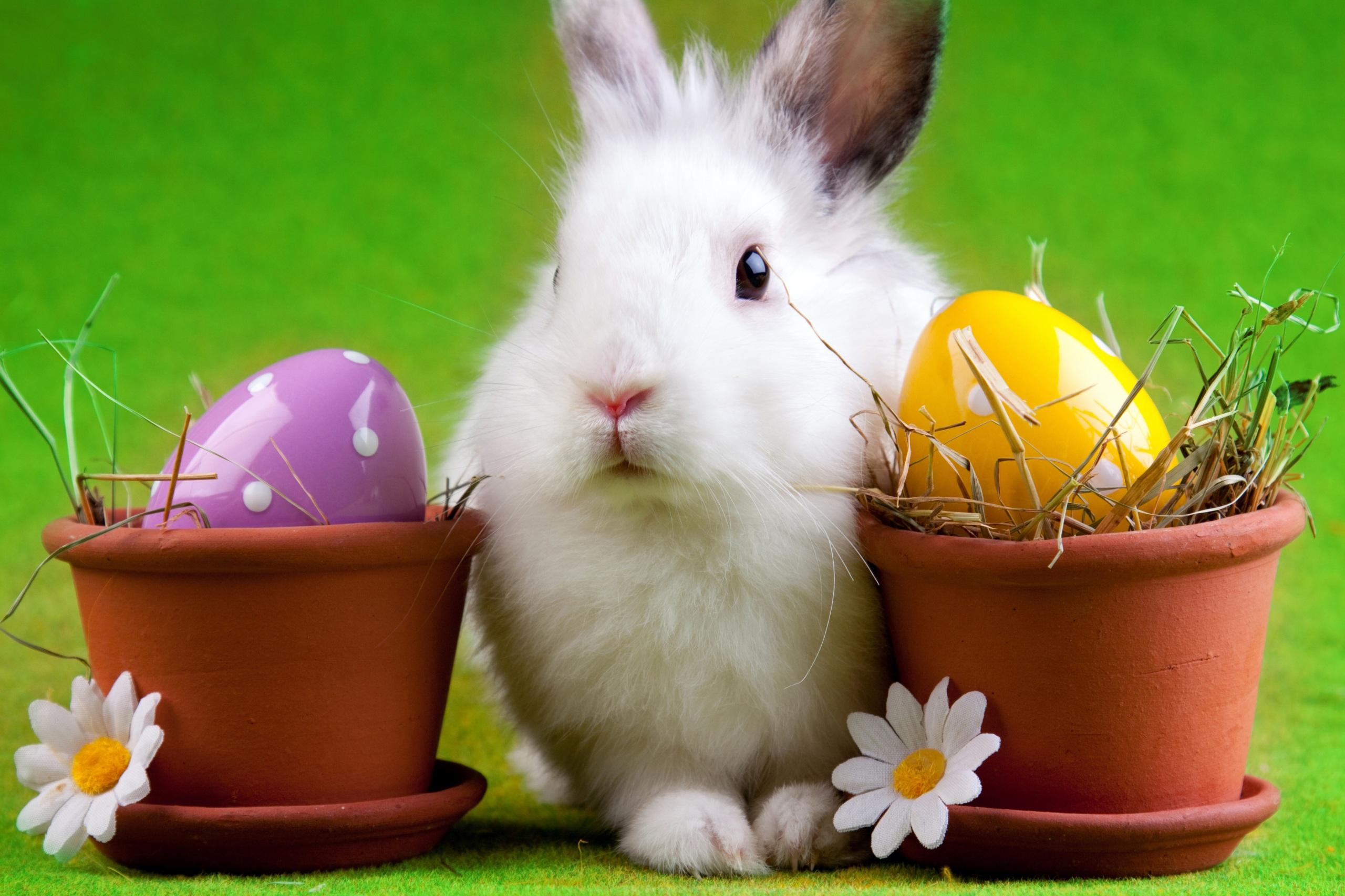 Пасхальный кролик