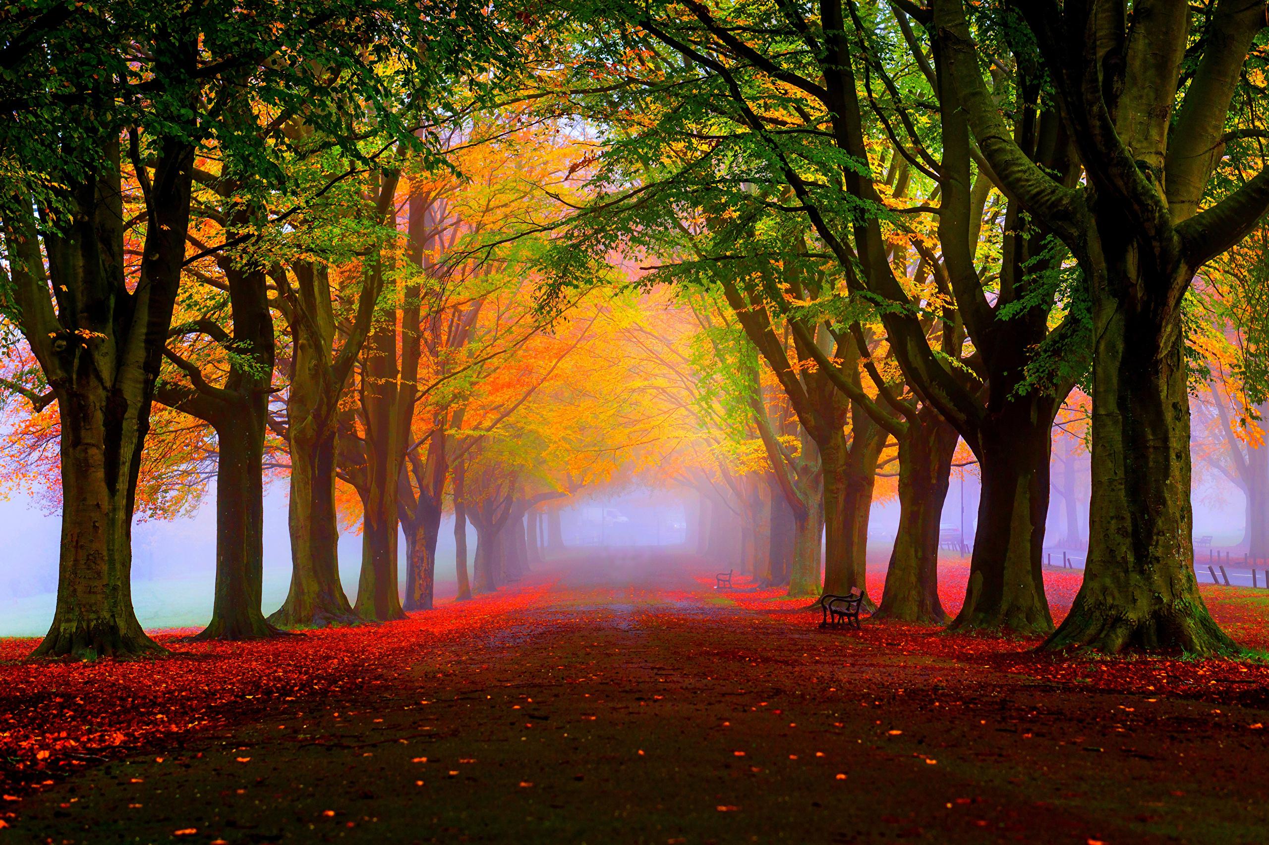 природа деревья листья осень nature trees leaves autumn  № 1036978 загрузить