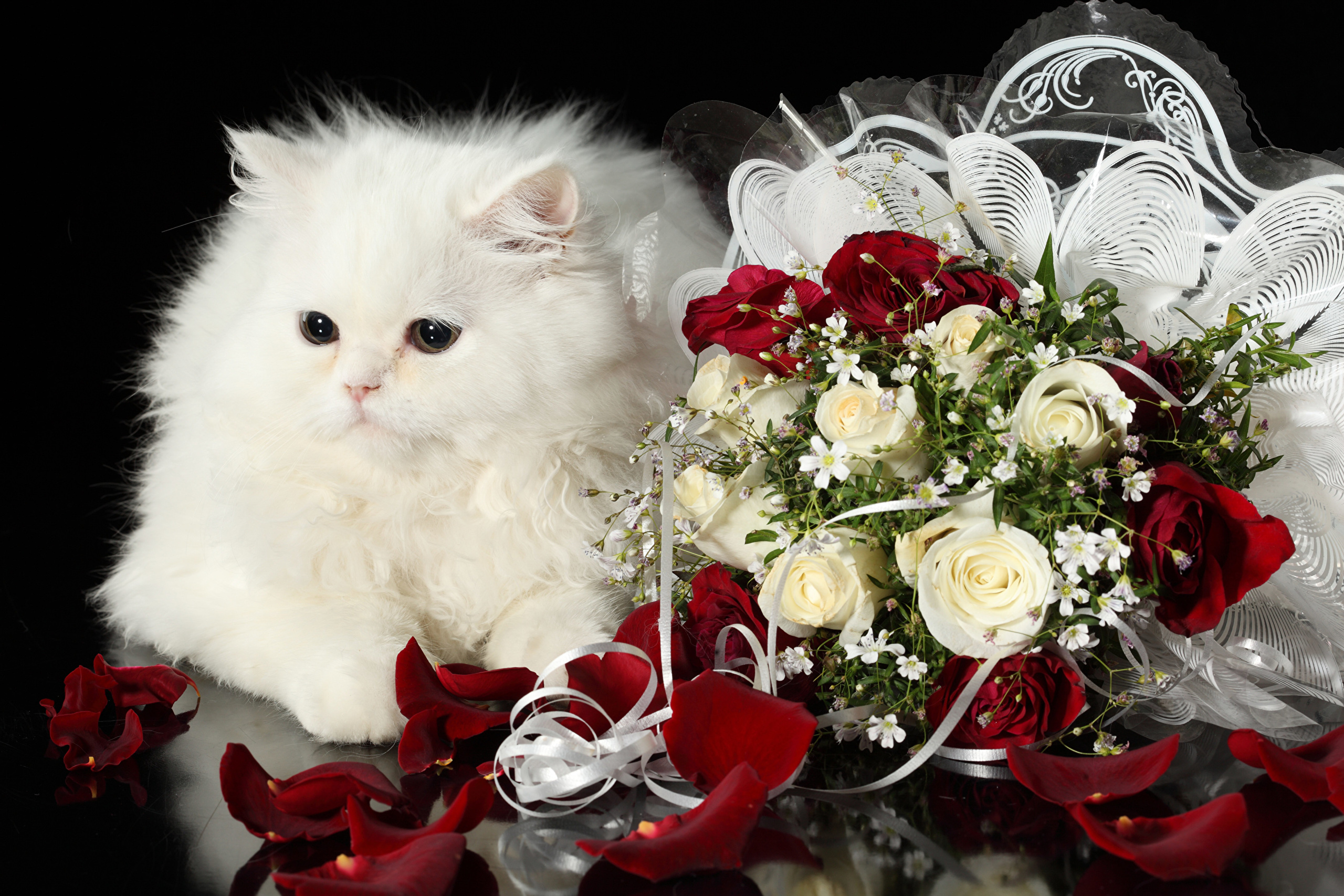 Открытки цветы для тебя с животными 525