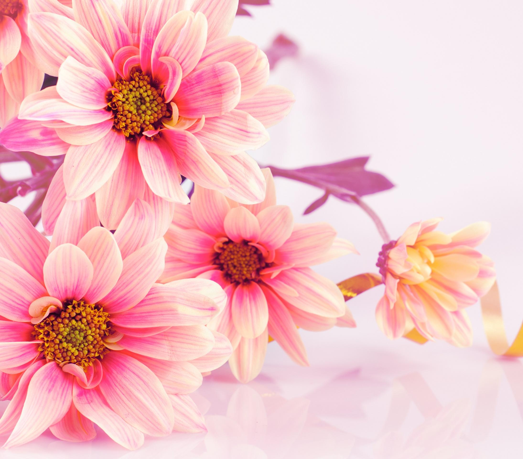 Шутерсток с цветами