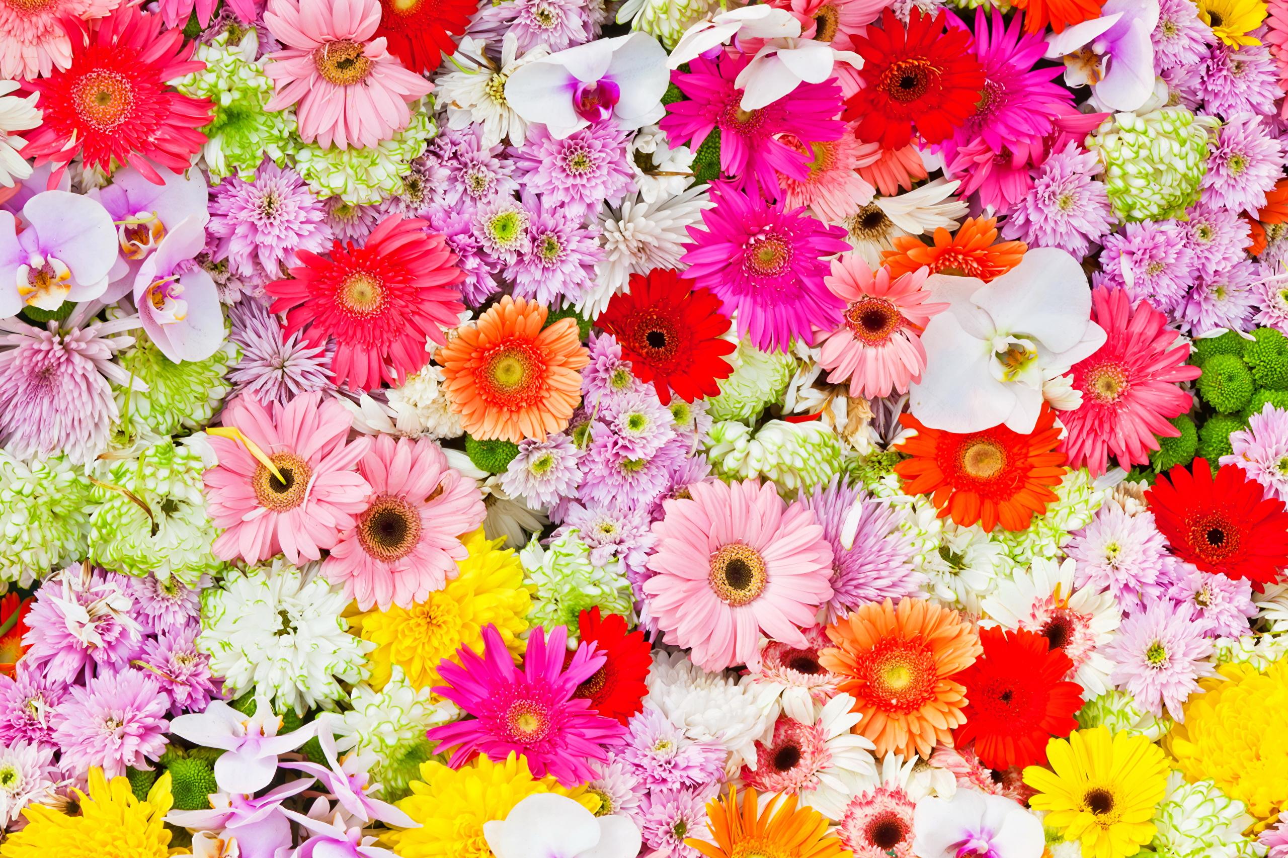 Цветы красивые герберы