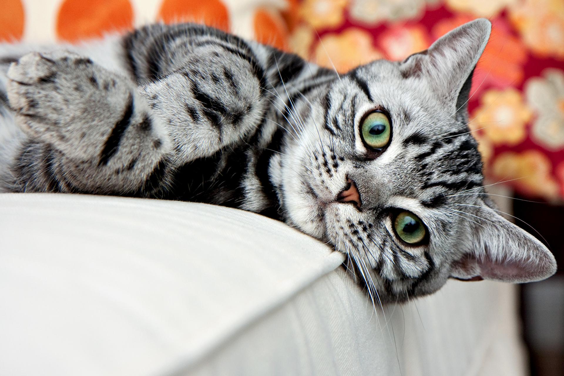 кошка зеленые глаза постель  № 3655453 бесплатно