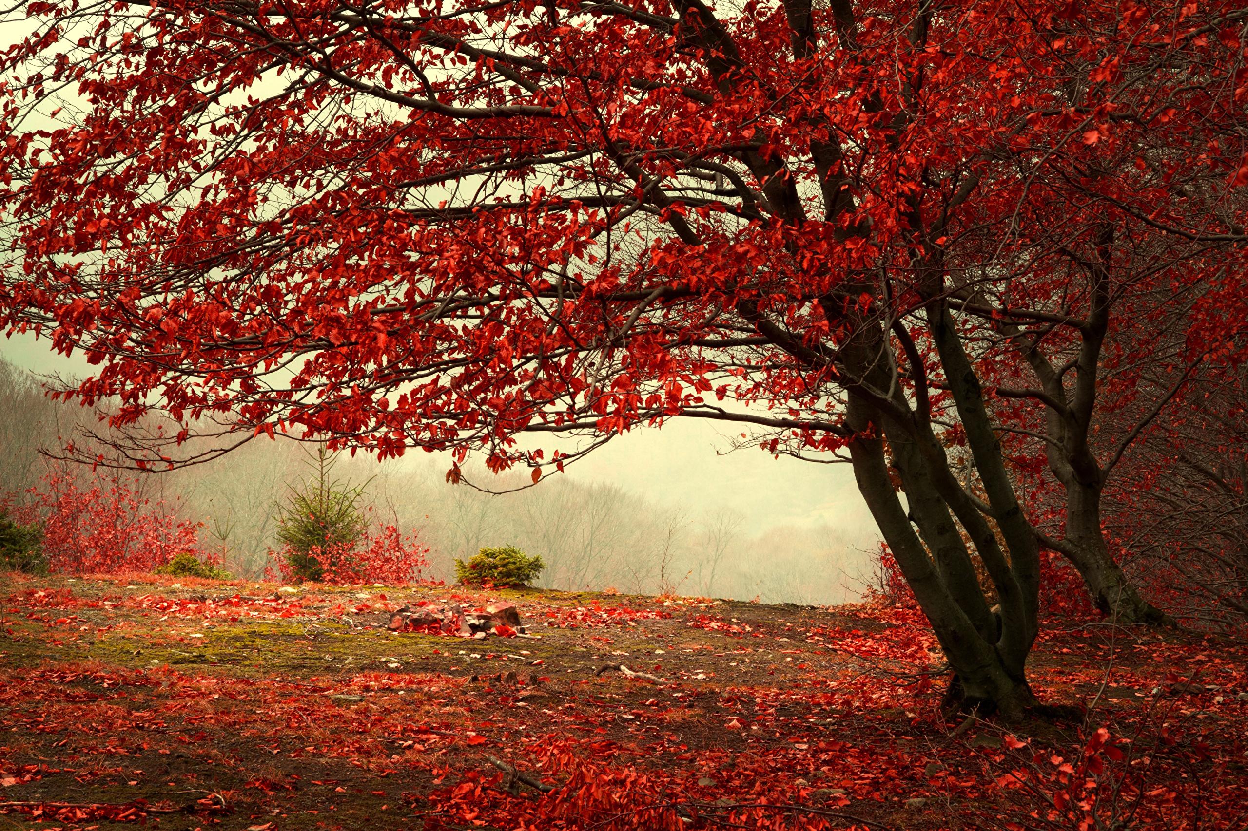 красный осенний лес  № 249397 загрузить