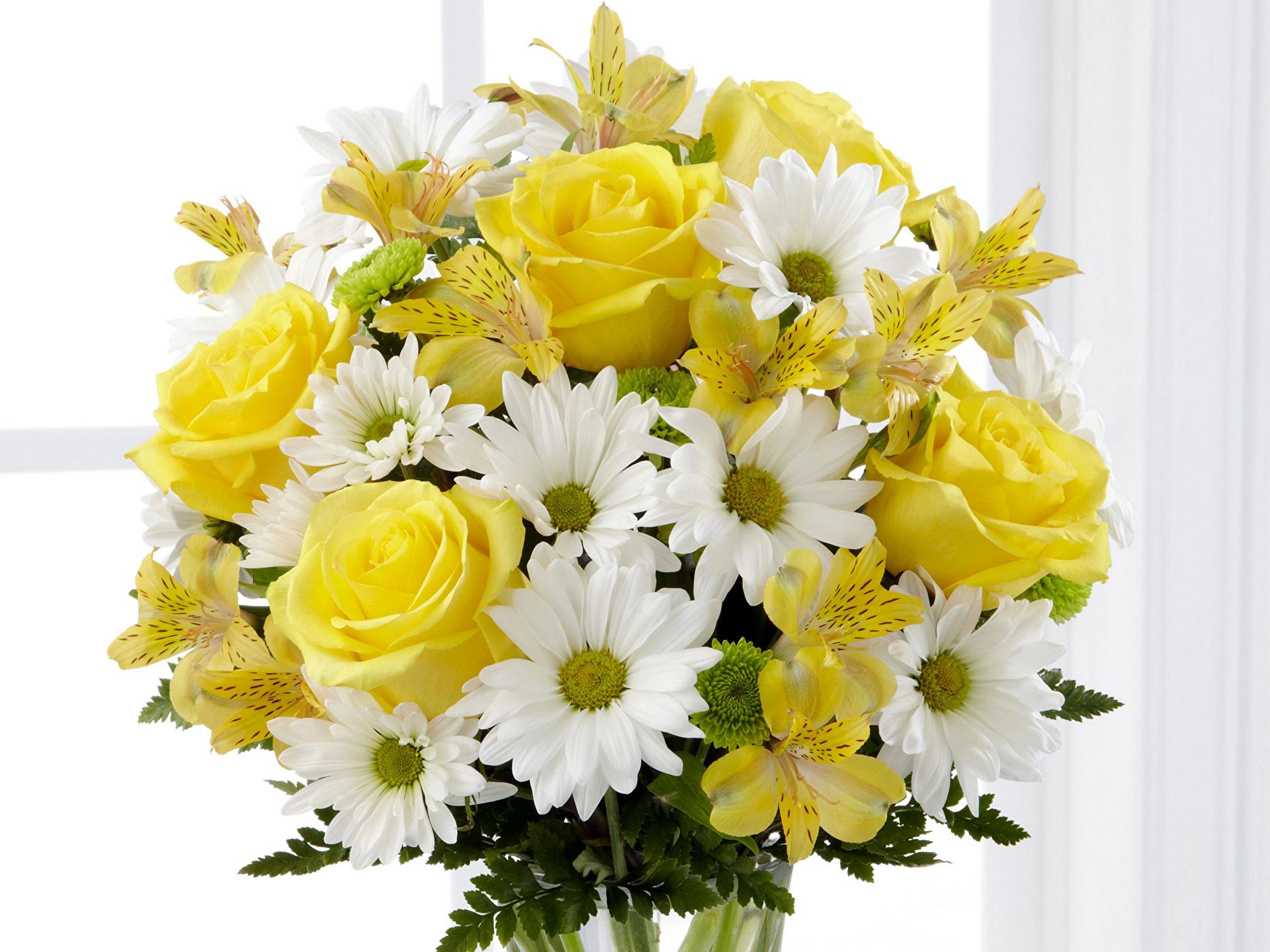 Хризантемы цветы букеты красивые