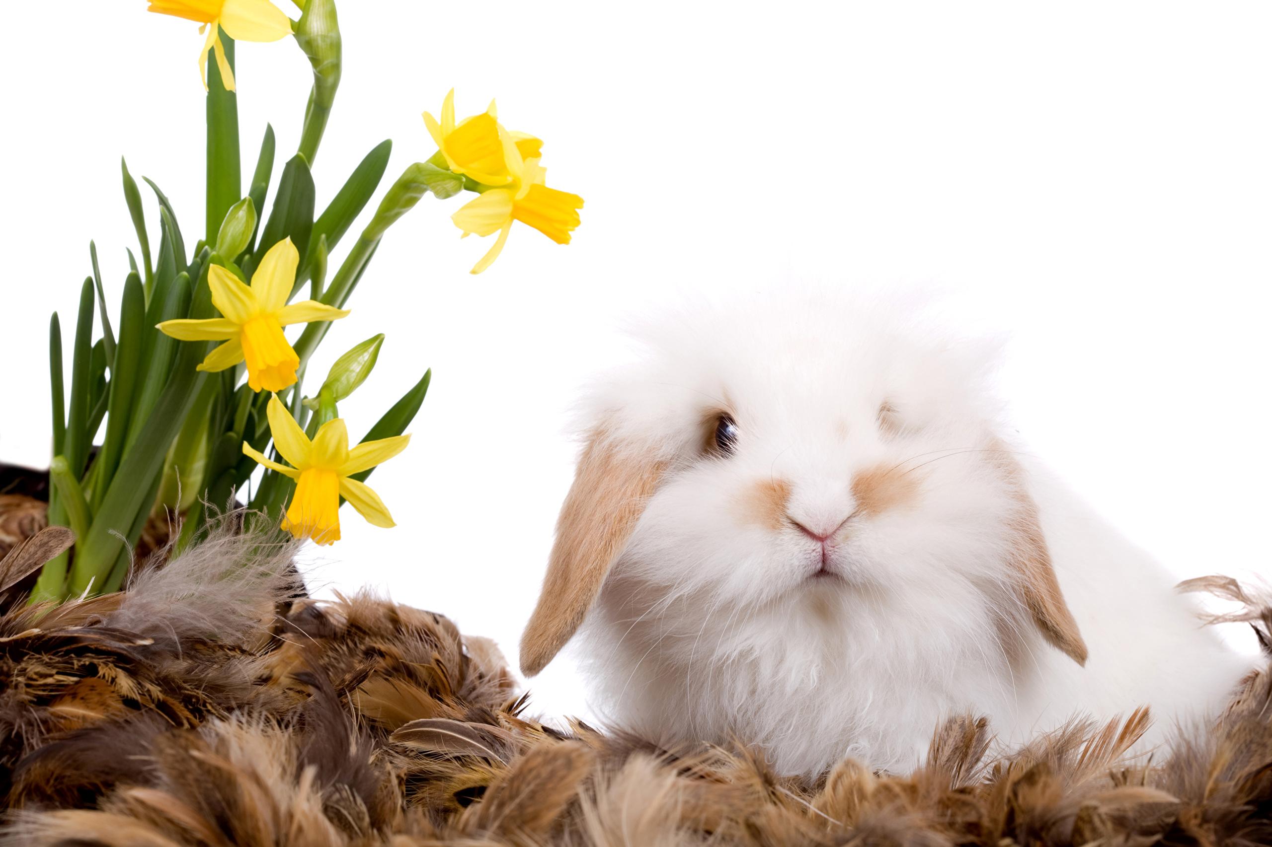 кролик с тюльпанами  № 1144639 без смс