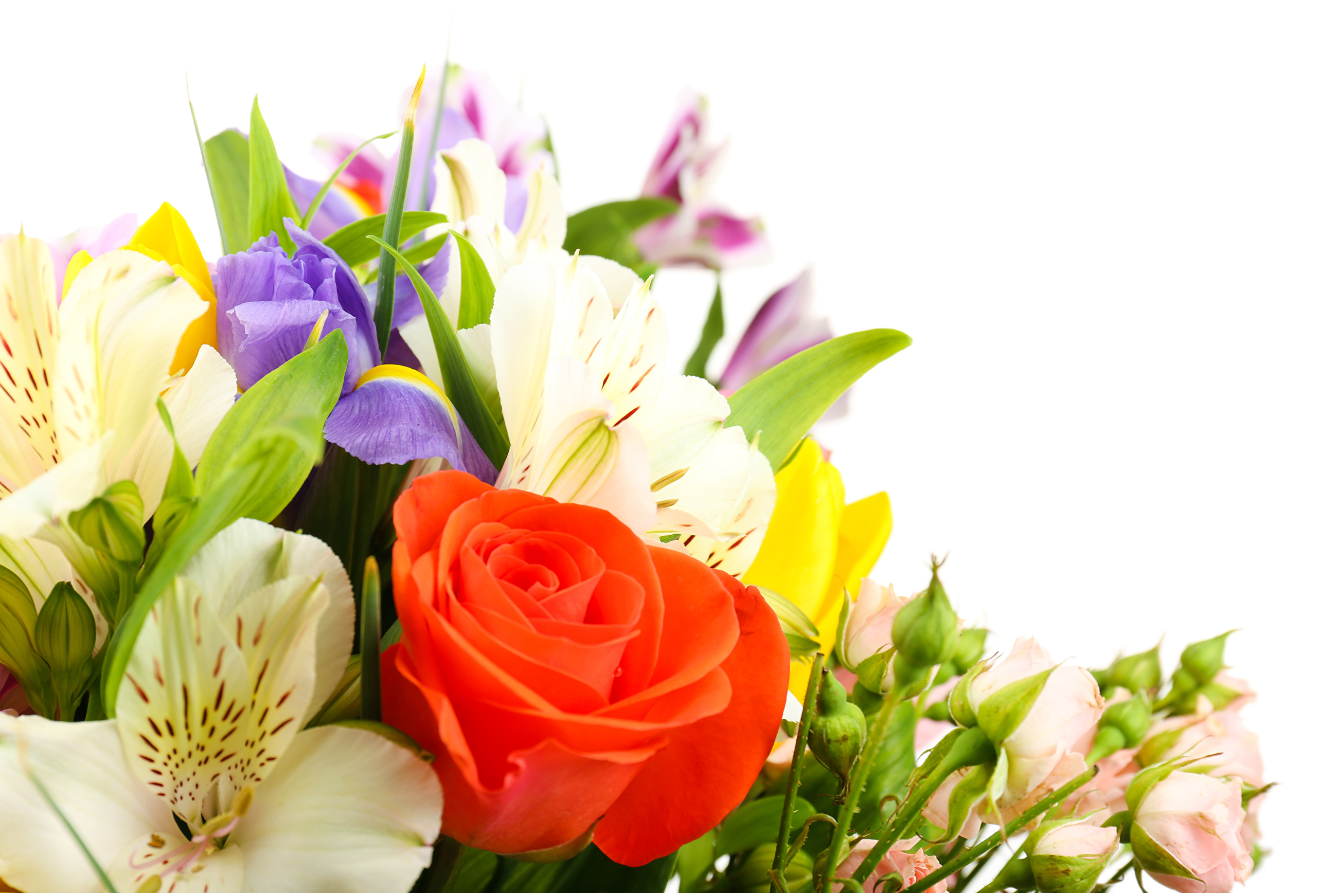 Букеты цветов для фона