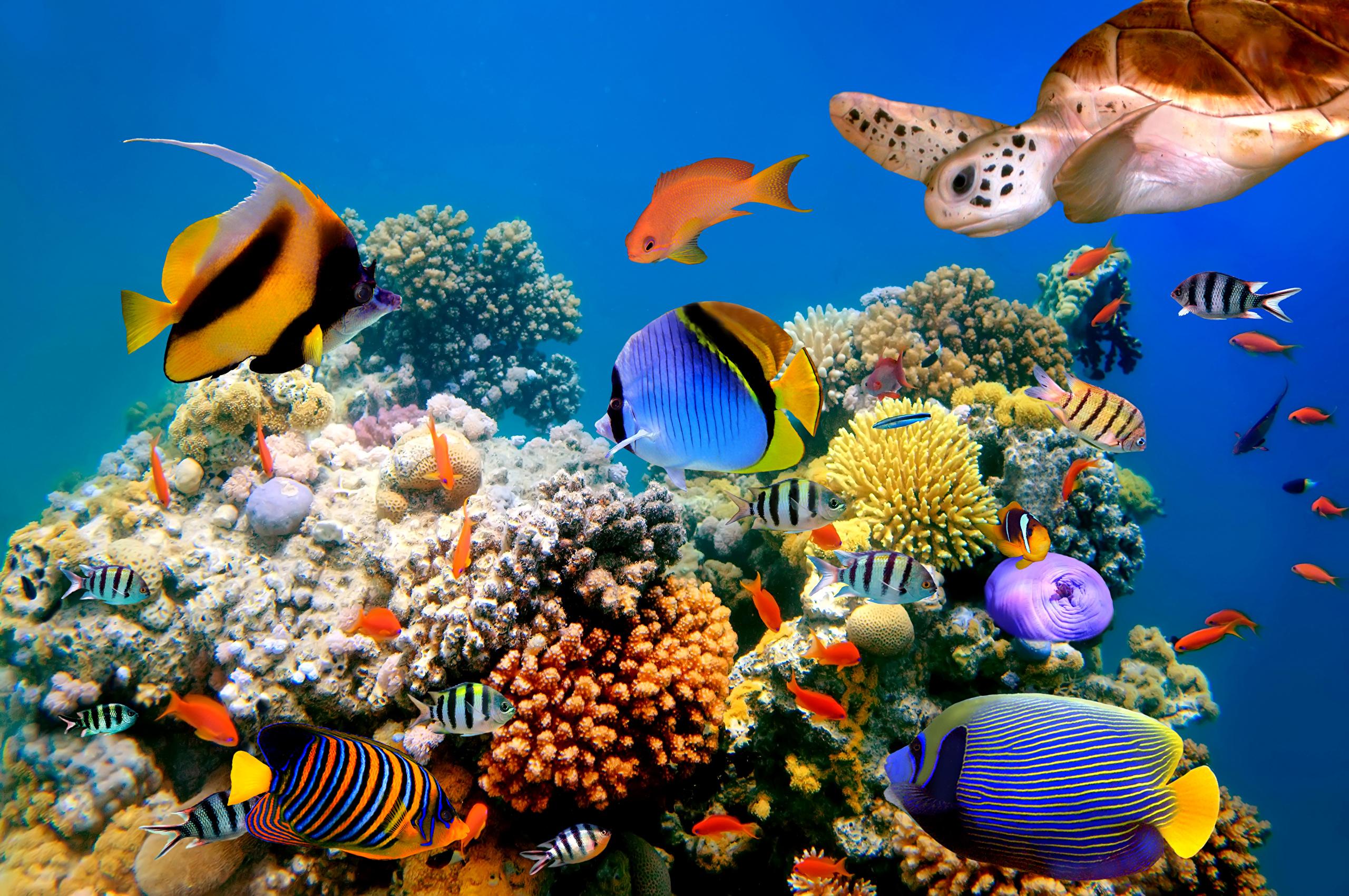 Яркие краски подводного мира  № 618857 загрузить