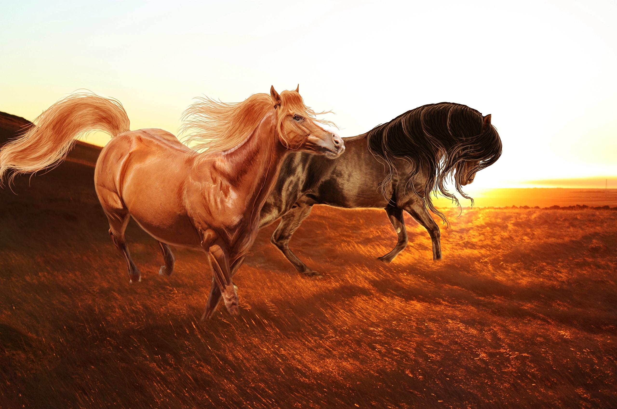 3д лошади обои для рабочего стола № 564031  скачать