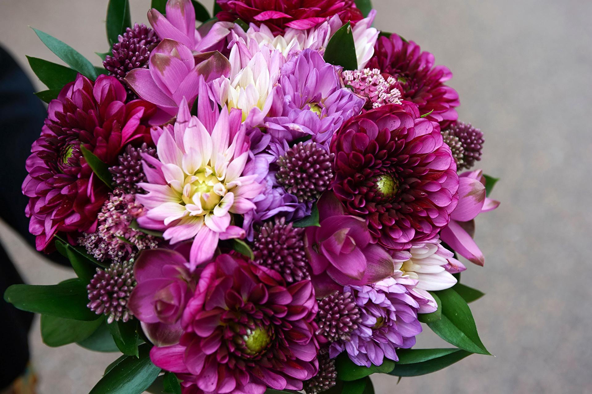 Фото цветы хризантемы букеты