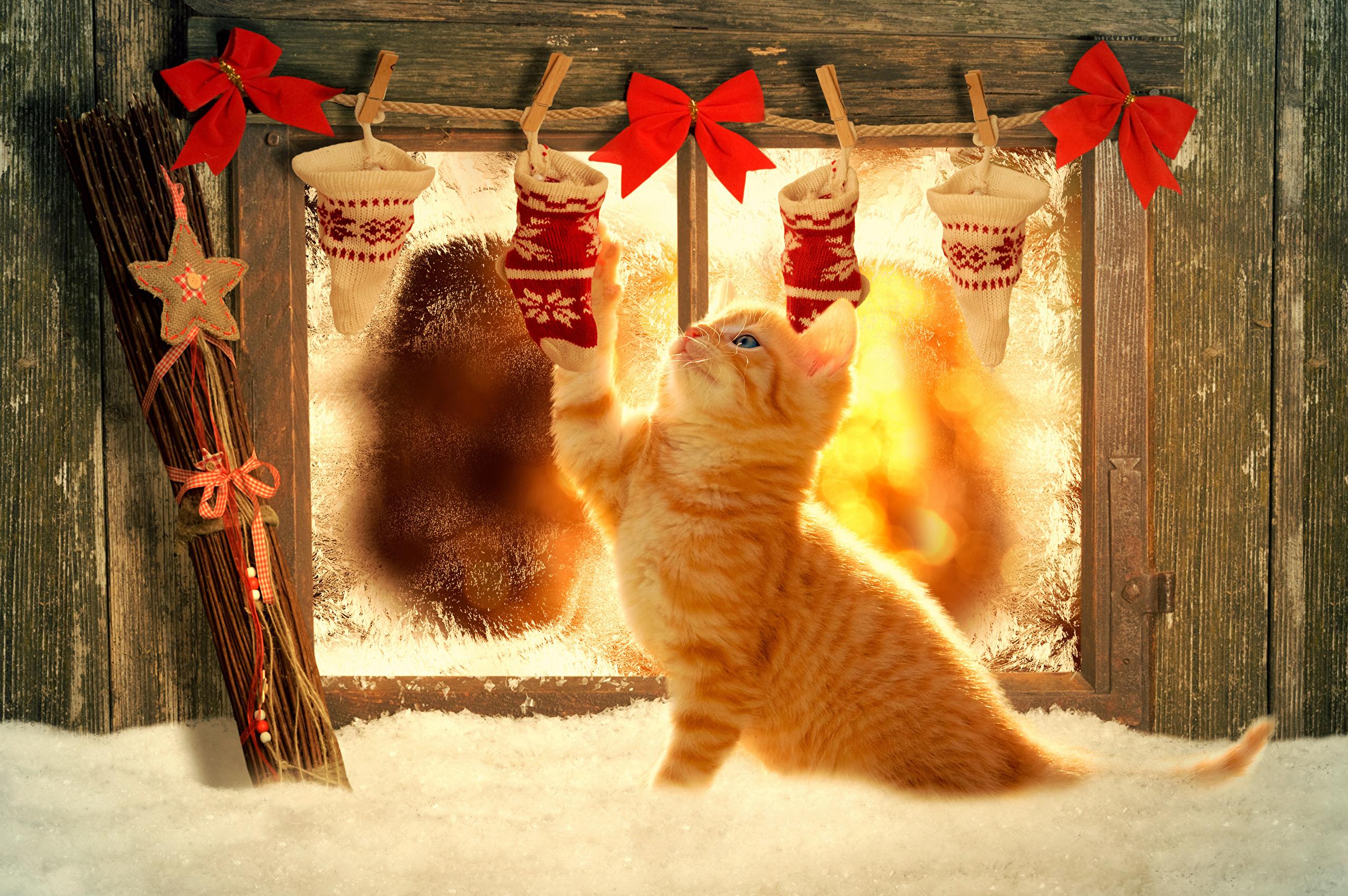 28 Cat Pumpkin Stencils  Band of Cats